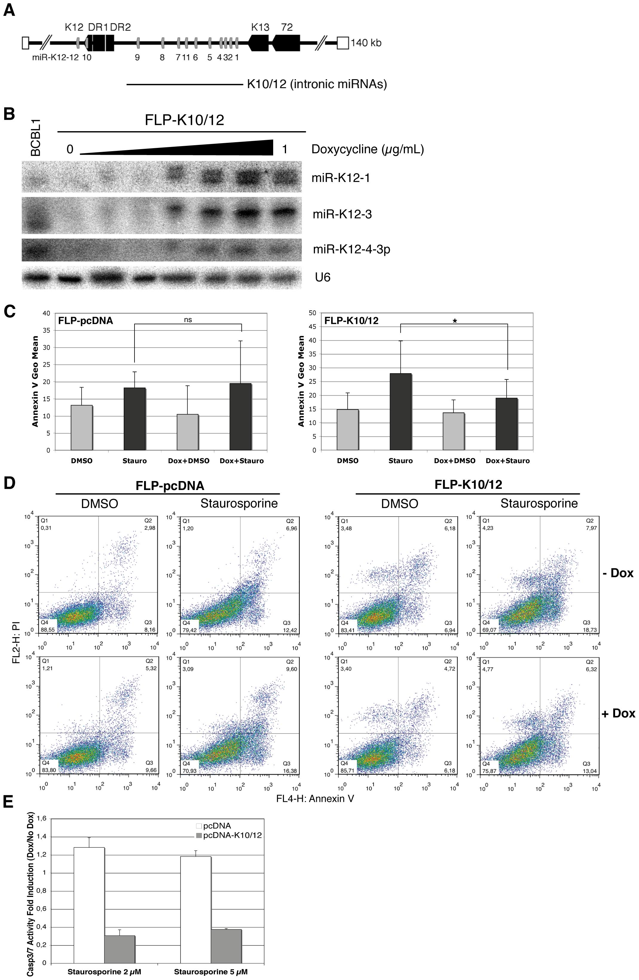 HEK293 cells expressing KSHV miRNAs are less sensitive to apoptosis.
