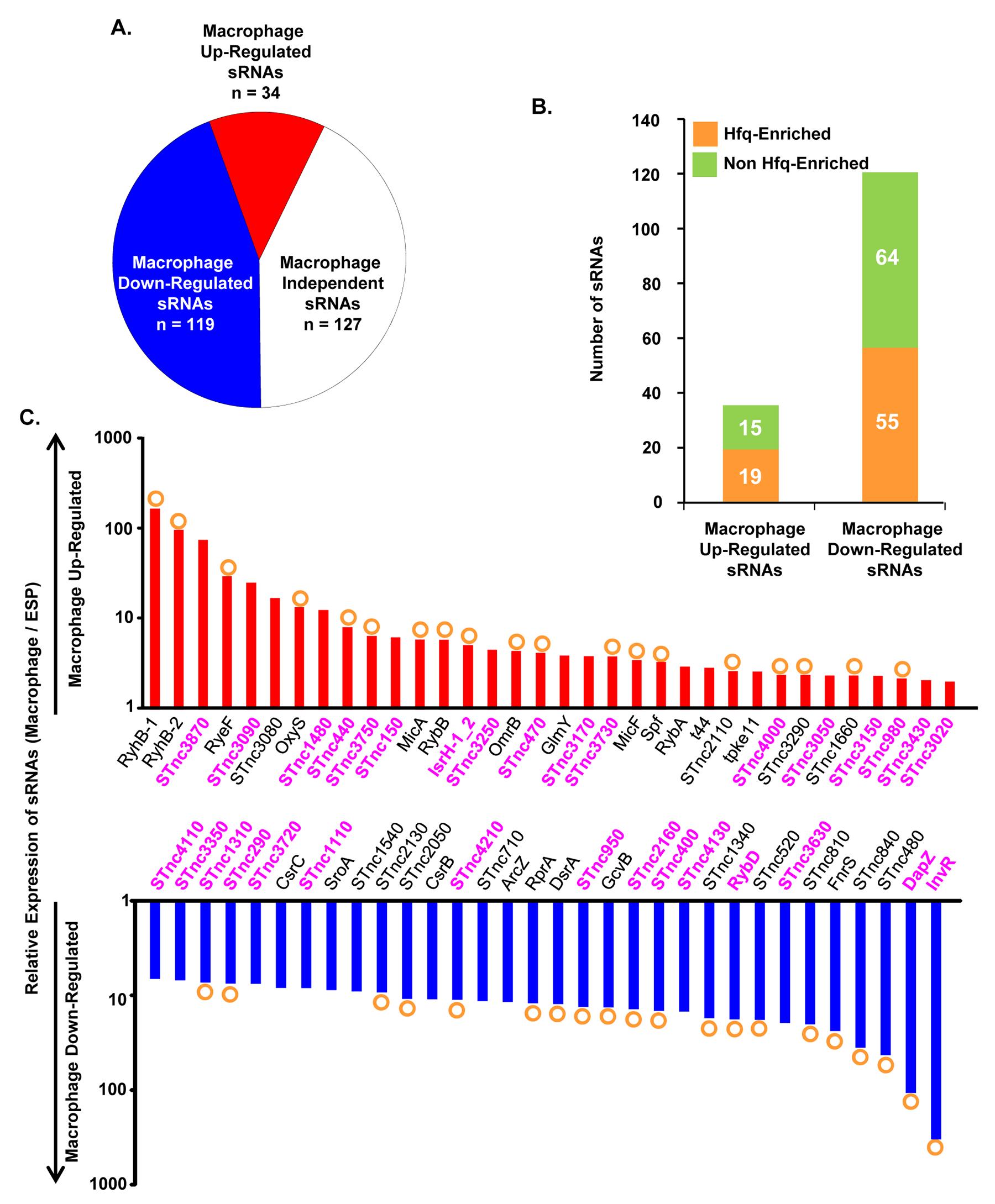 Intra-macrophage expression profile of <i>Salmonella</i> sRNAs.