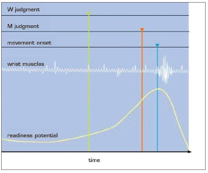 Potenciál připravenosti (Bereitschaftspotential, readiness potential) (20)