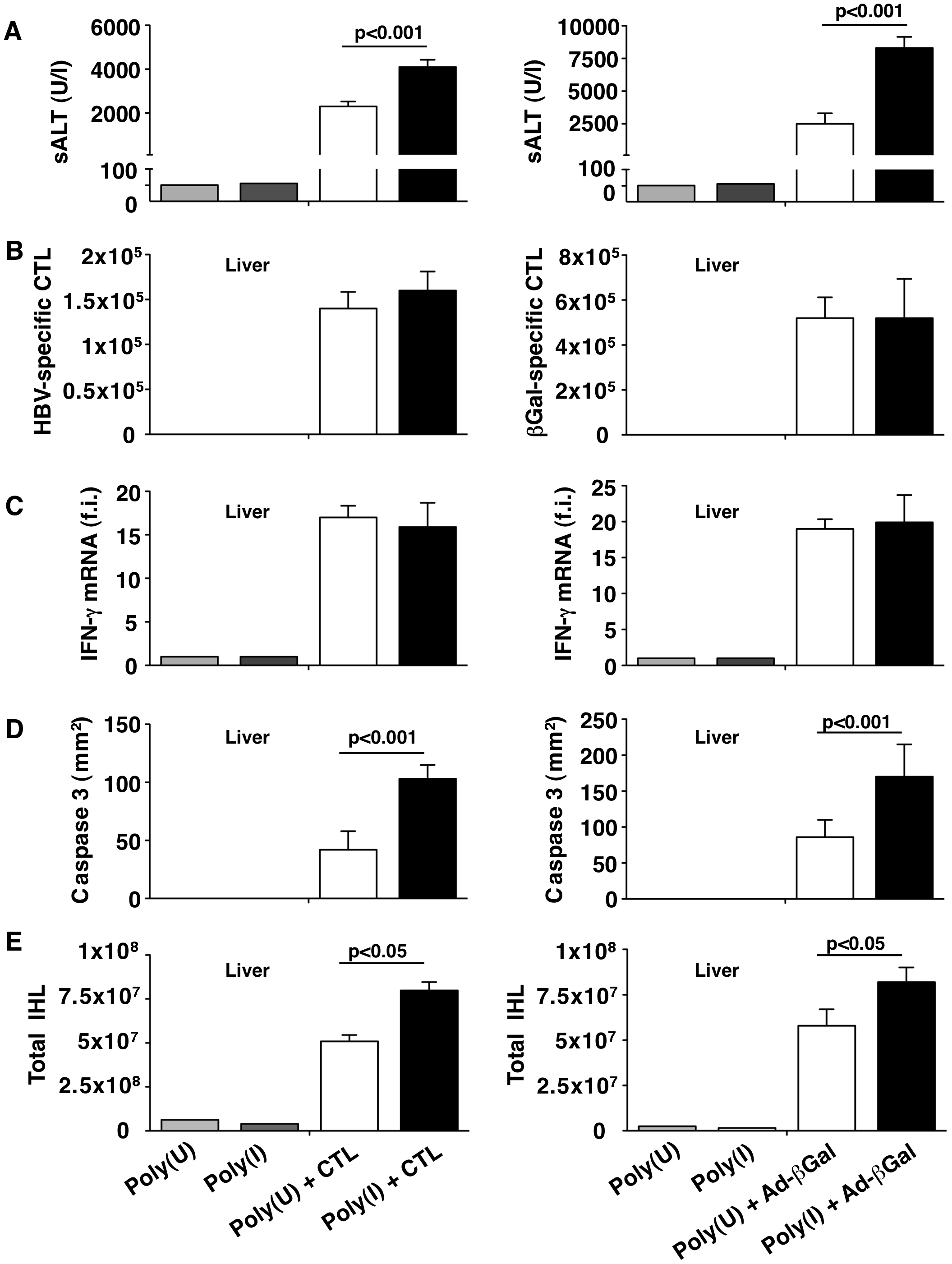 KCs remove apoptotic hepatocytes in a scavenger receptor-dependent manner.