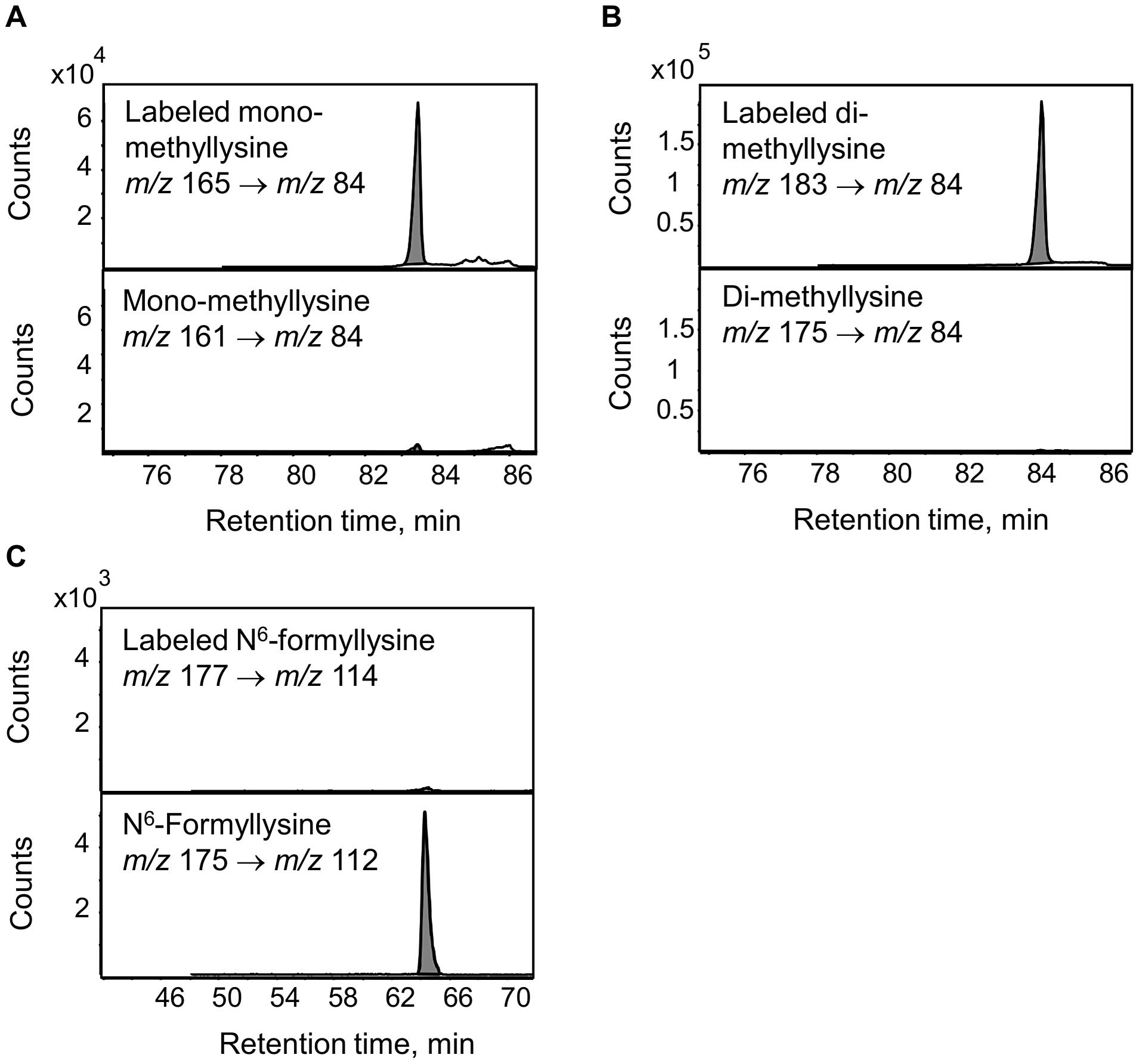 Analysis of lysine demethylation as a source of N<sup>6</sup>-formyllysine.