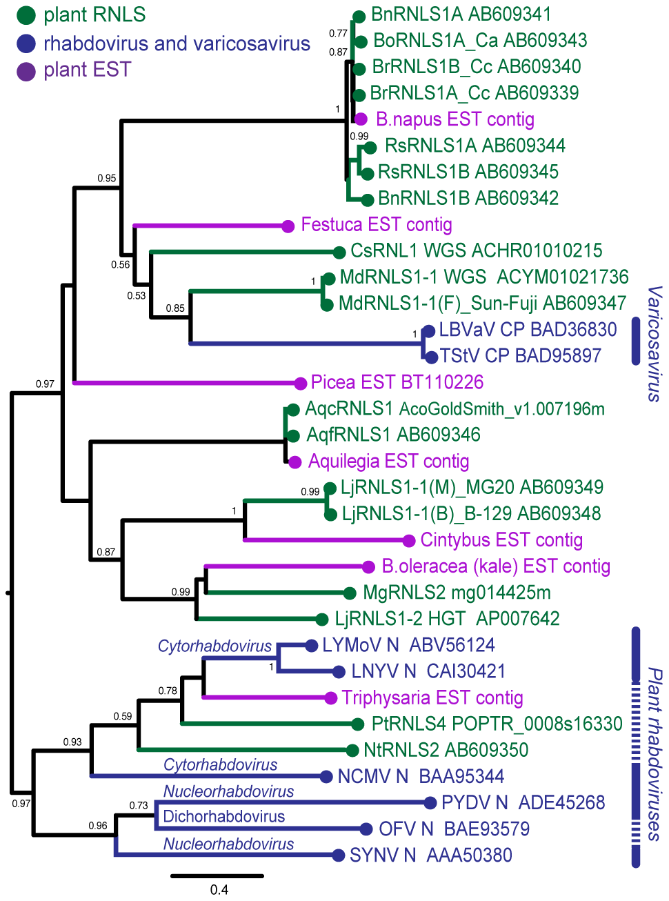 Phylogenetic analyses of the nucleocapsid protein sequences of rhabdoviruses and RNLSs.