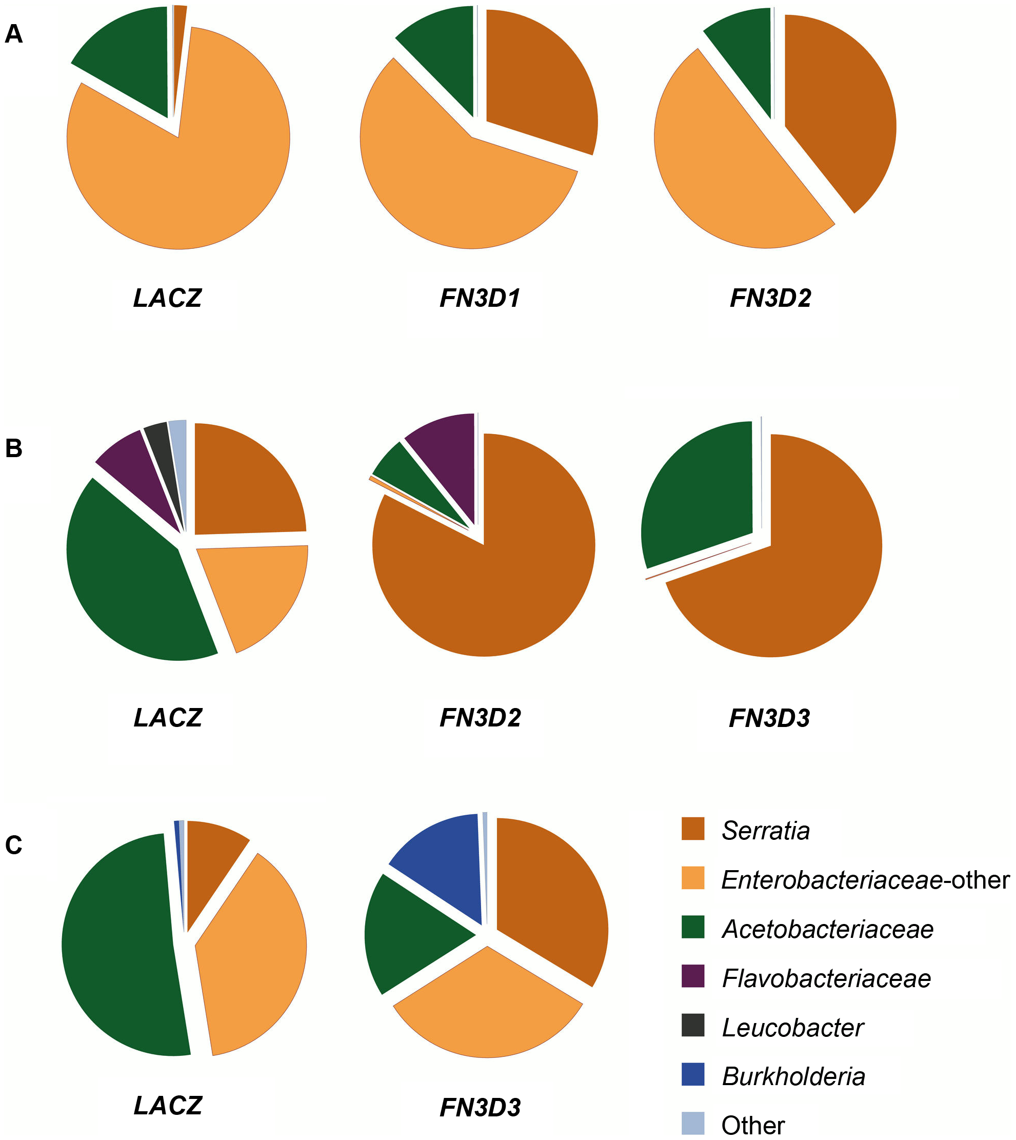 <i>FN3D1–3</i> silencing changes the composition of the mosquito gut microbiota in favor of <i>Enterobacteriaceae</i>.