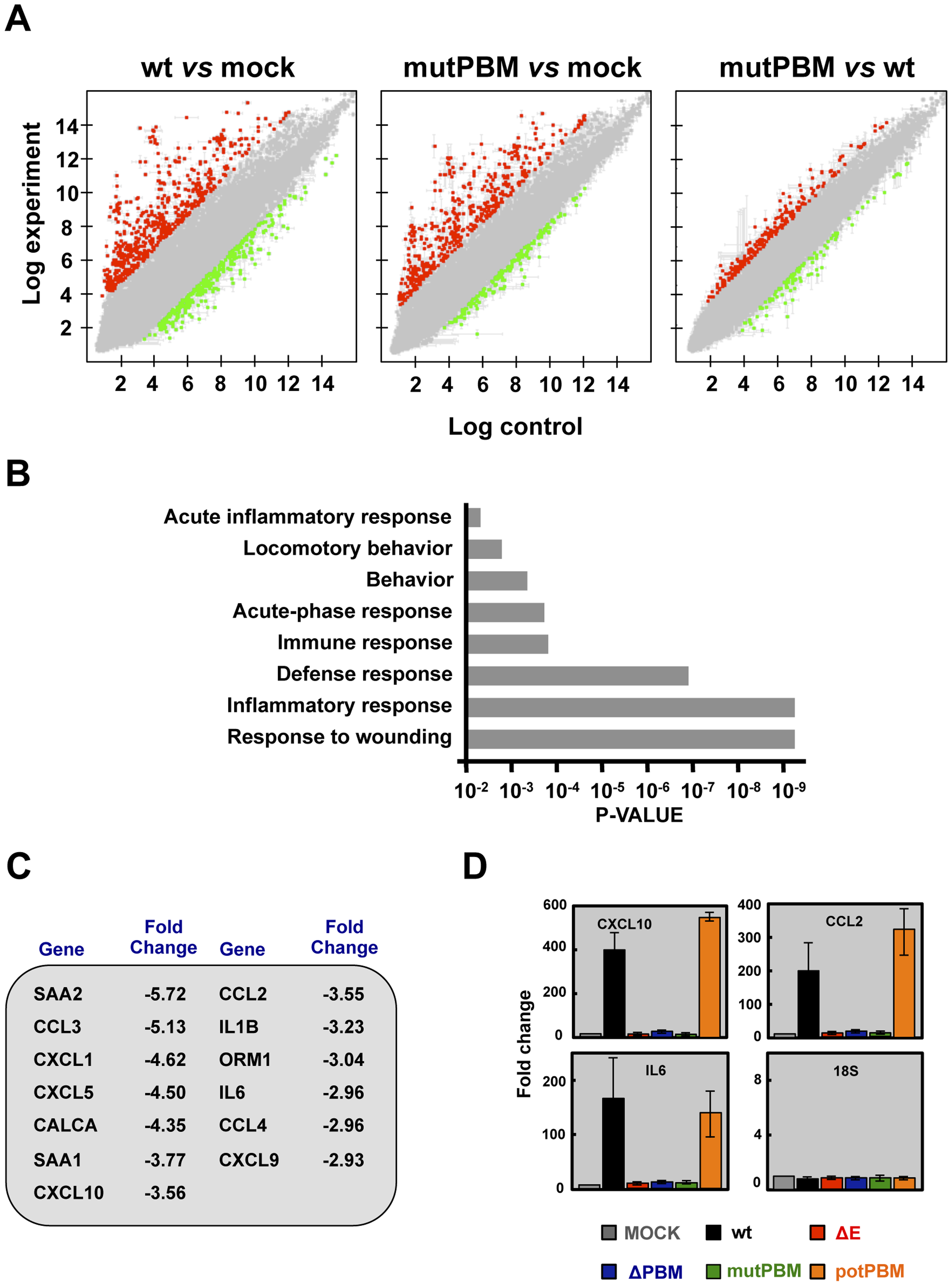 Effect of SARS-CoV E protein PBM on host gene expression.