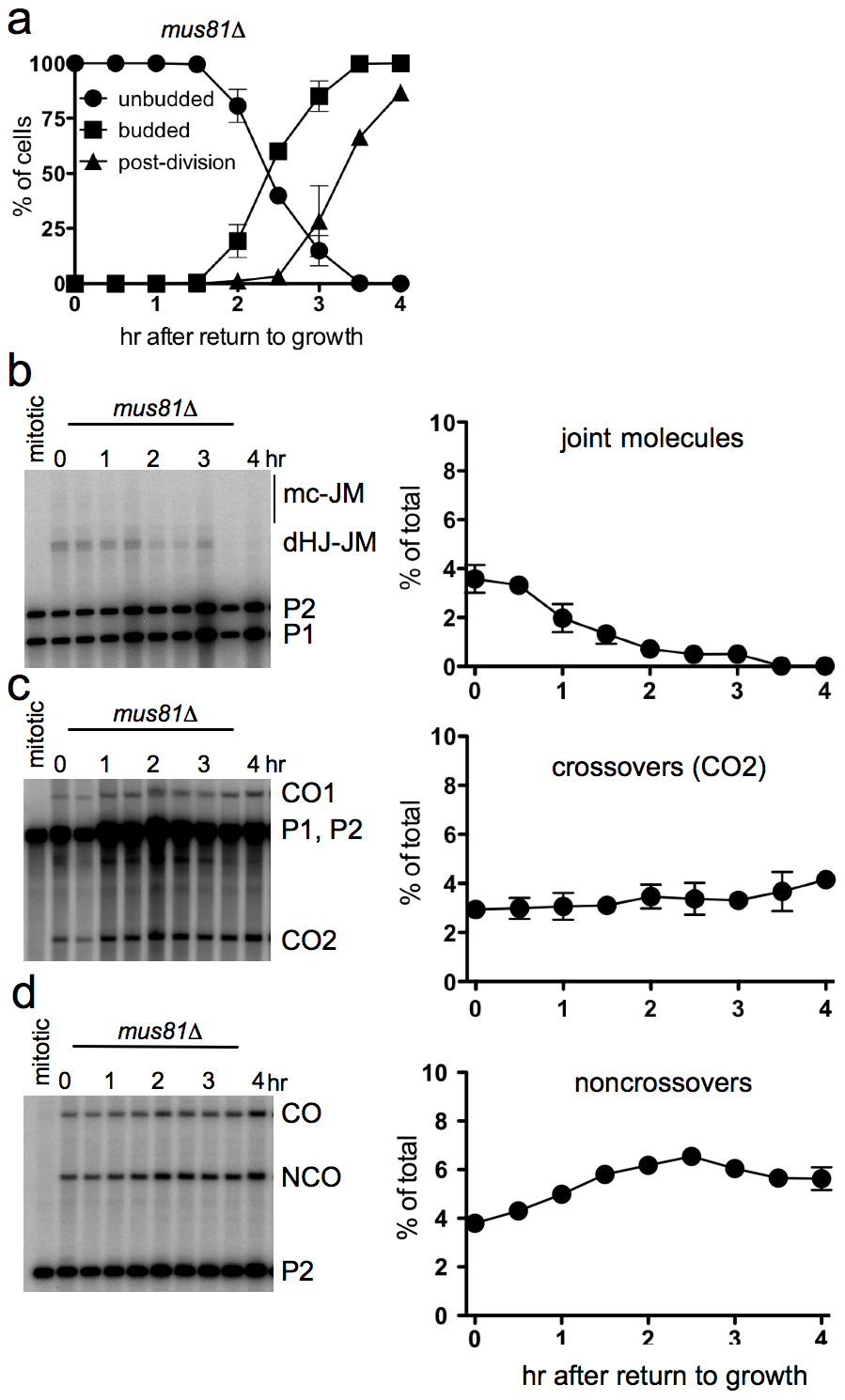 Efficient JM resolution without CO production after RTG in the absence of Mus81.