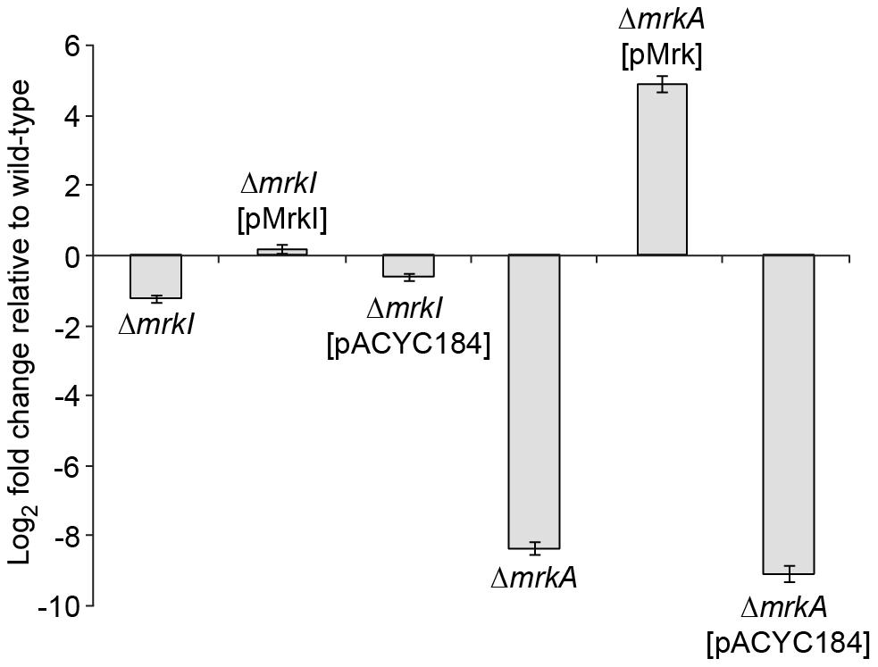 Quantitative RT-PCR analysis of <i>mrkA</i> RNA levels.