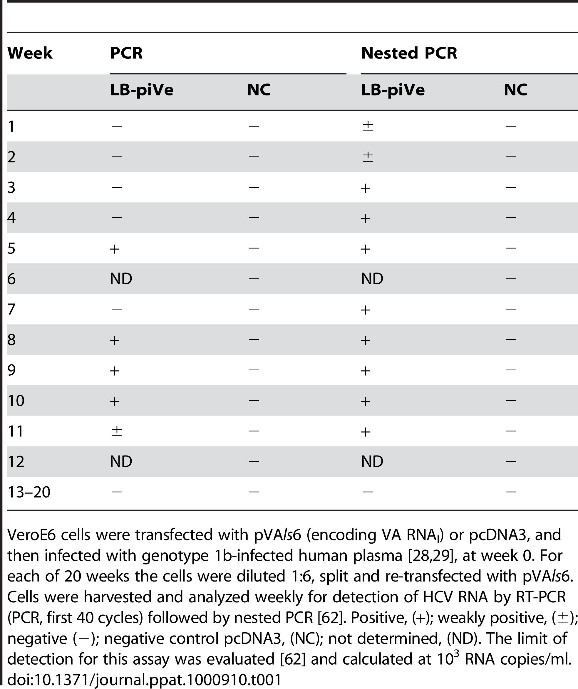HCV persistent infection in VeroE6 cells.