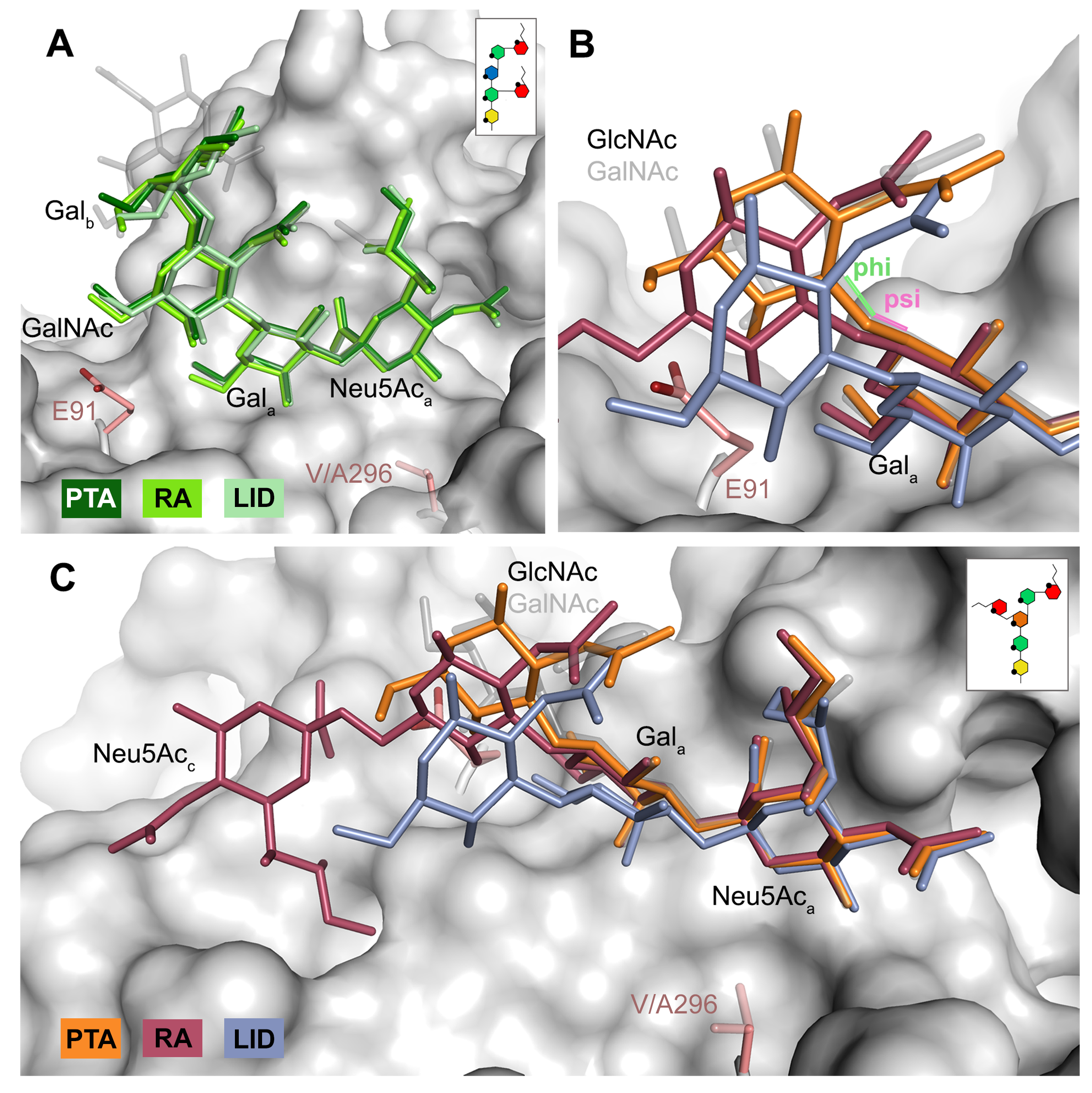 Differences in receptor binding patterns across glycans.
