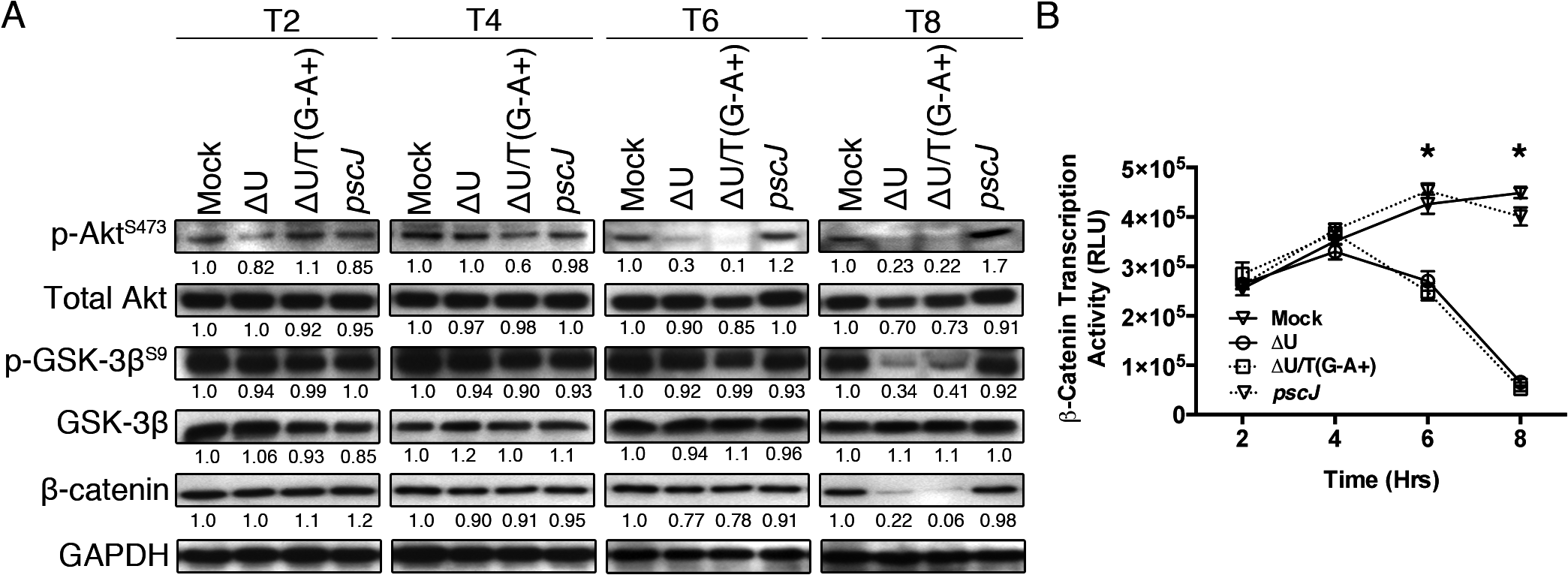 ExoT/ADPRT interferes with integrin-mediated survival signaling.