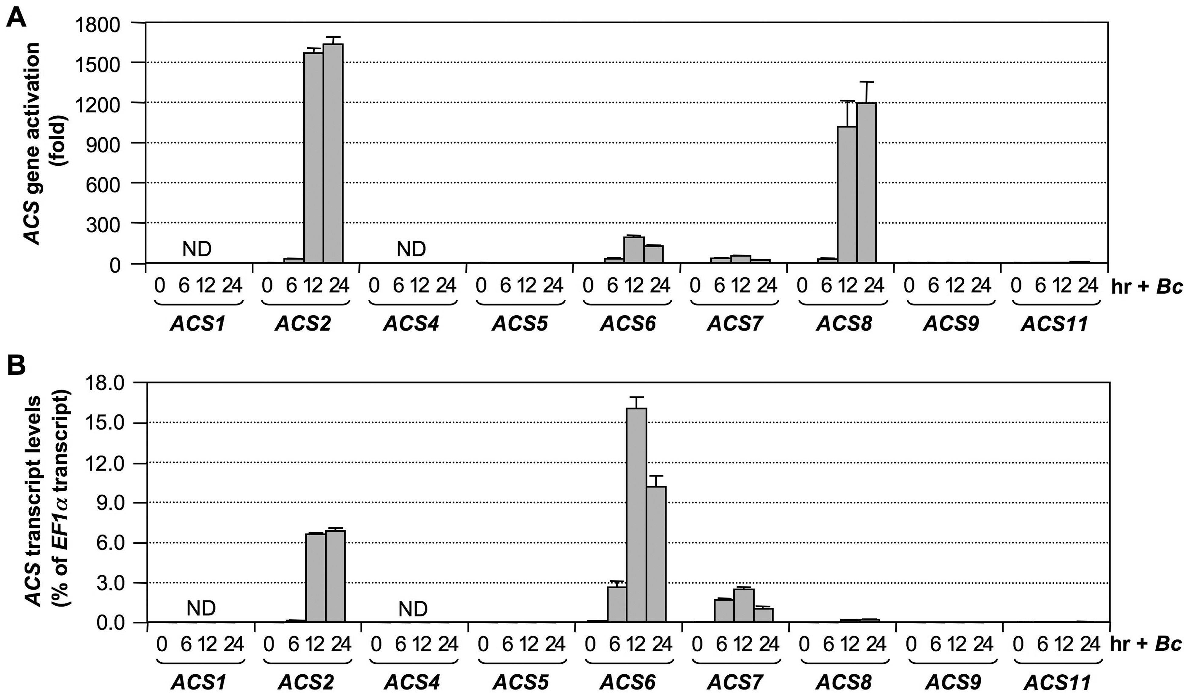 Activation of <i>ACS</i> gene expression in Arabidopsis after <i>B. cinerea</i> infection.