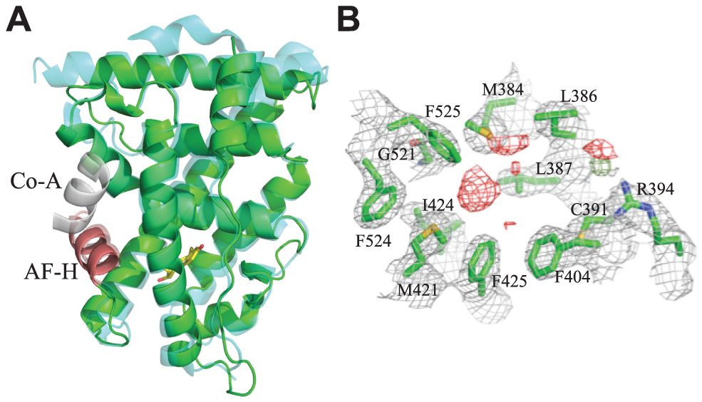 Crystal structure of CgER in the active conformation without ligand.