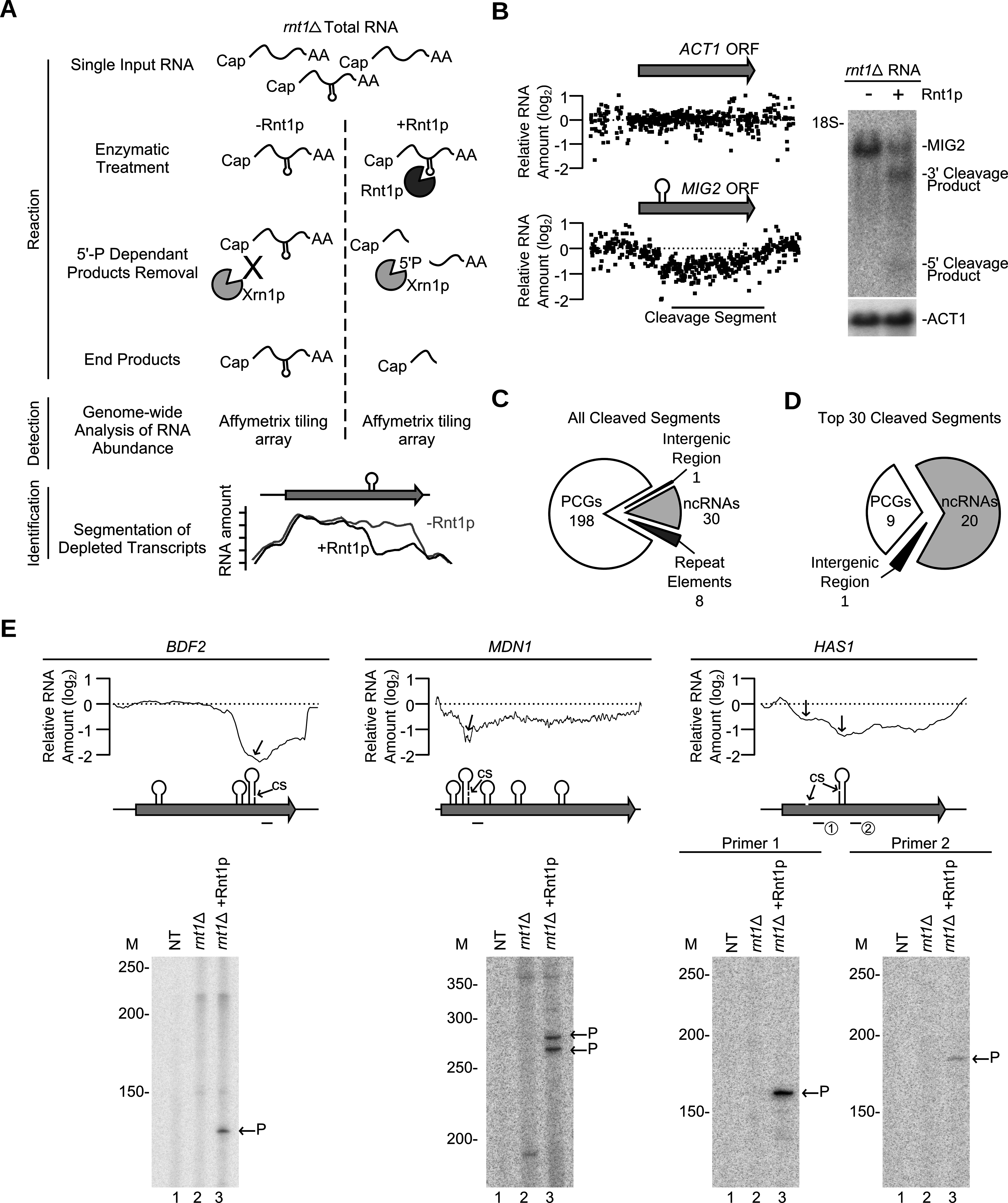 Gene expression independent identification of RNA degradation targets.