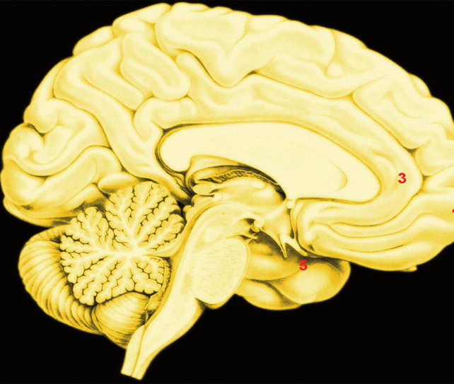B. Empatie Legenda: Přibližná poloha uzlů konektomů aktivovaných sociálním usuzováním; 6 A. – maxima distribuce zrcadlových neuronů; 6 B. – oblasti aktivované empatií; 1. – lobulus parietalis inferior; 2. – ventrolaterální prefrontální kůra a ventrální premotorická kůra; 3. – dorzální přední cingulární kůra; 4. – mediální prefrontální kůra; 9. – přední insula;
