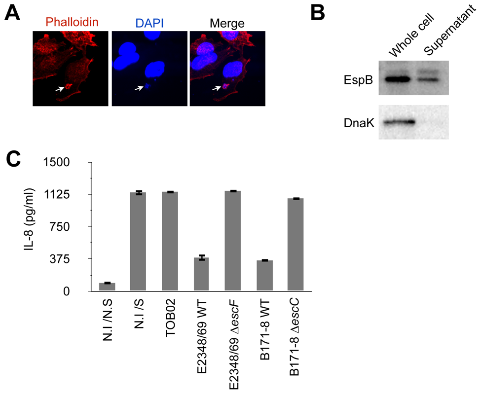 TOB02 is a functional tool for studying the effects of individual effectors.