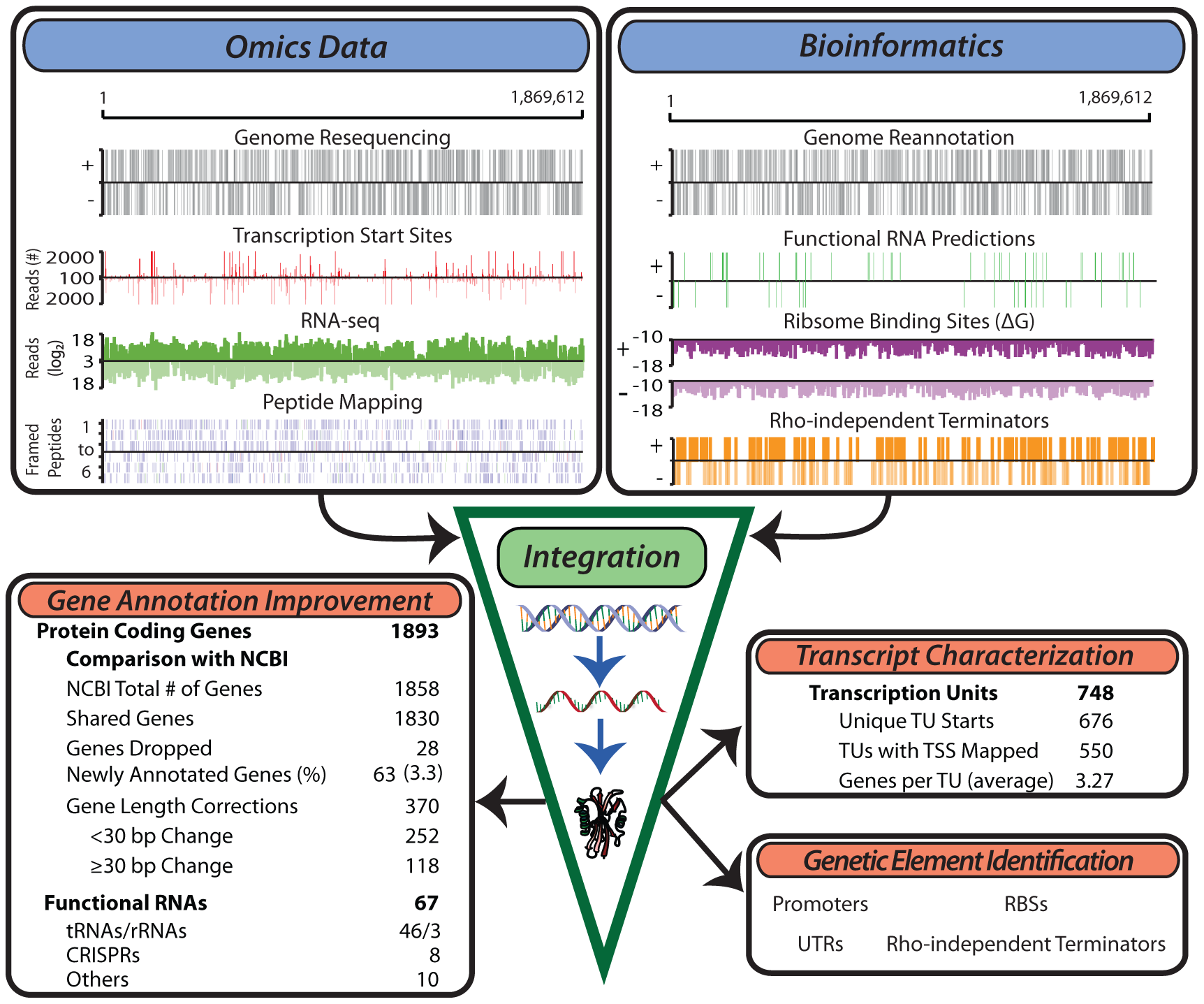 Generation of multiple genome-scale datasets integrated with bioinformatics predictions reveals the genome organization.