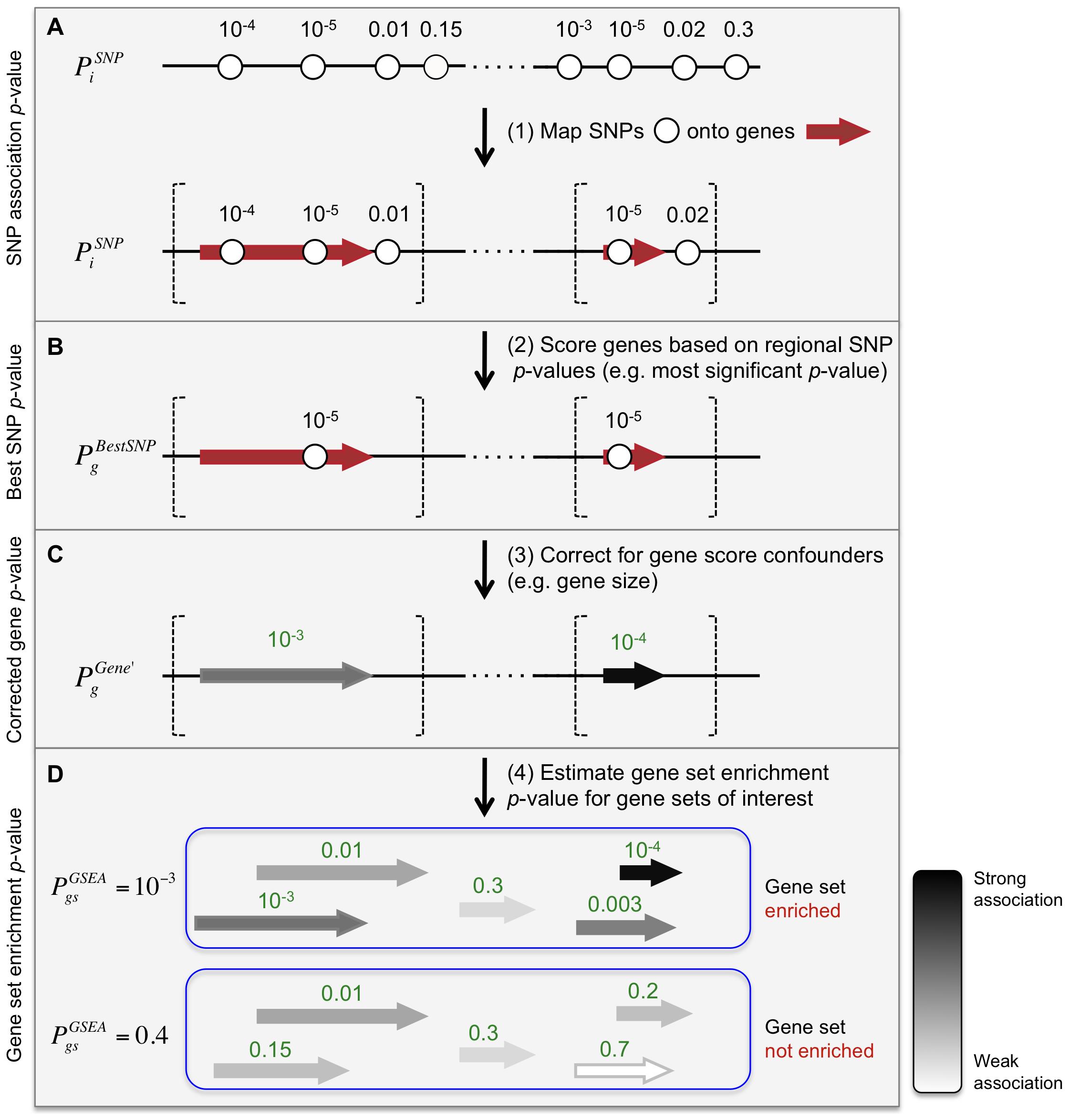 Description of Meta-Analysis Gene-set Enrichment of variaNT Associations (MAGENTA) method.