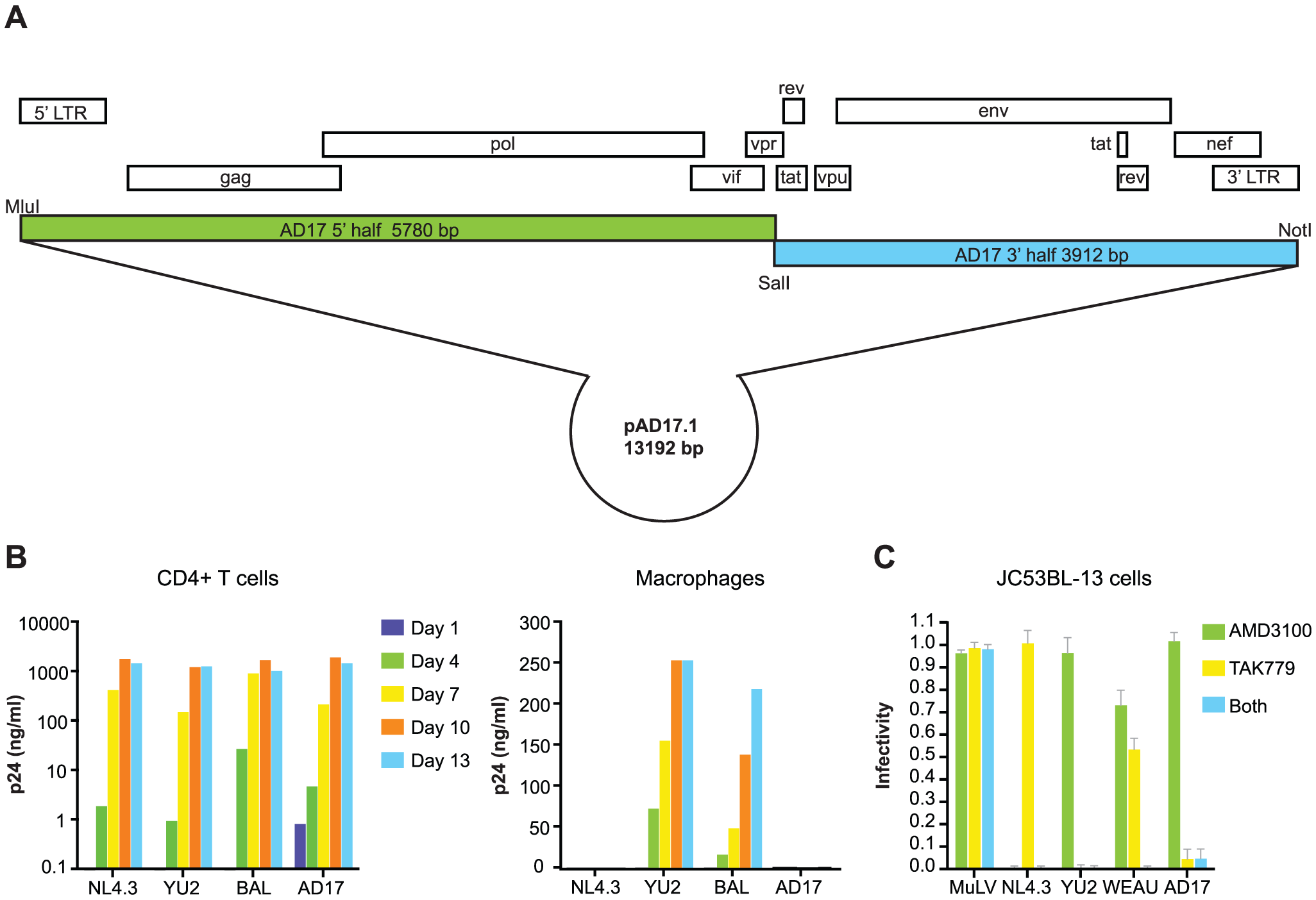 Molecular cloning and biological analysis of the transmitted/founder virus from subject AD17.