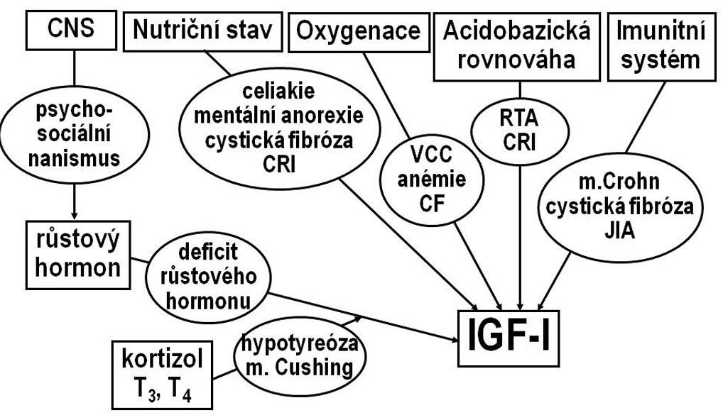 Osa růstový hormon-IGF-I. Hlavním regulátorem sekrece IGF-I je růstový hormon, ovlivněný neuroendokrinní aktivitou CNS. Na řízení sekrece IGF-I se dále podílejí hormony štítné žlázy a kortizol, nutriční stav, imunitní systém, zásobení tkání kyslíkem a acidobazická rovnováha. V oválech jsou uvedeny některé nozologické jednotky, které vedou ke snížení hladin IGF-I a k růstové retardaci. CF- cystická fibróza CRI – chronická renální insuficience JIA – juvenilní idiopatická artritida RTA- renální tubulární acidóza VCC – vrozené srdeční vady