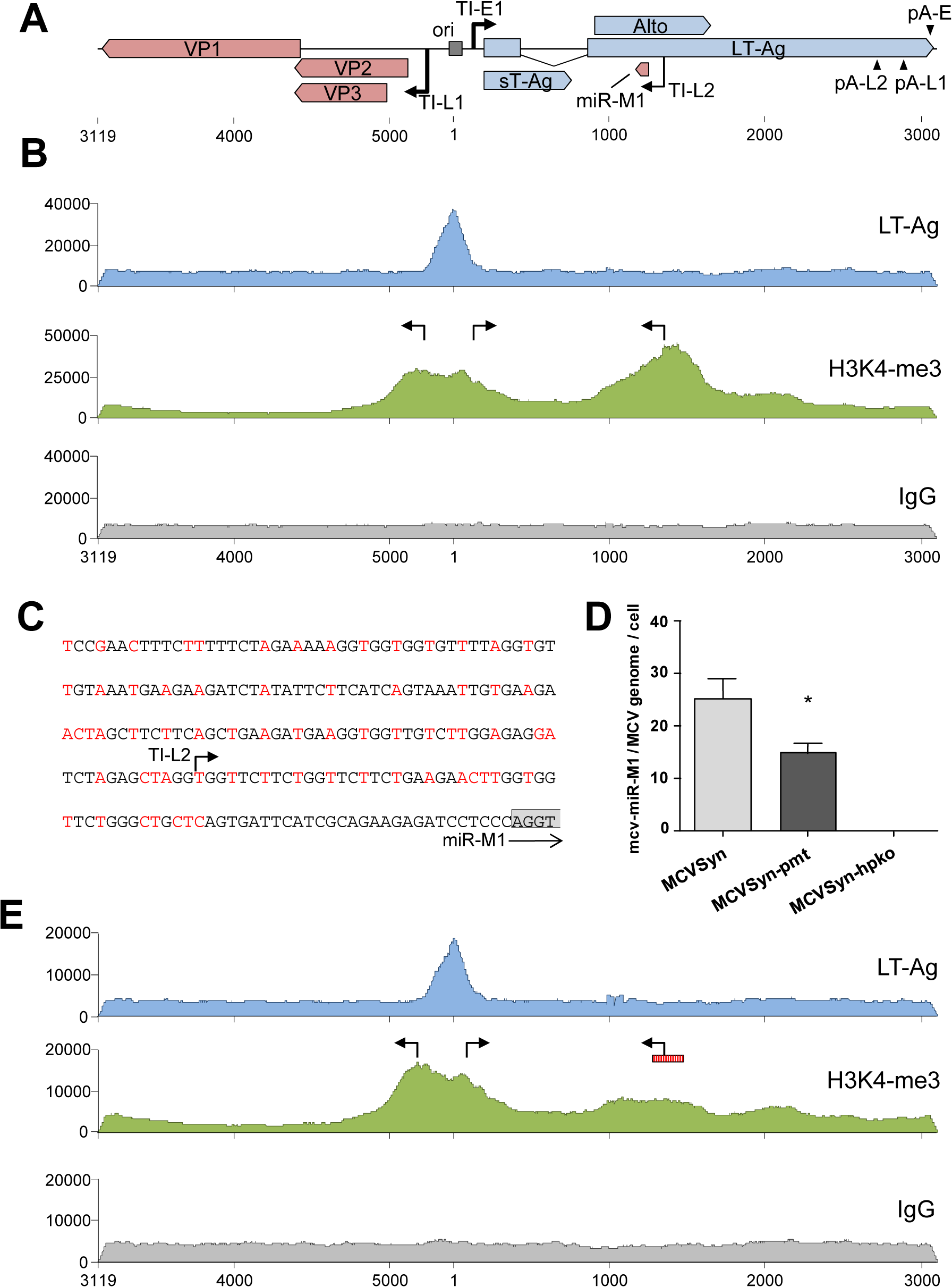 ChIP-seq analysis and miRNA expression in wt and mutated MCVSyn genomes.