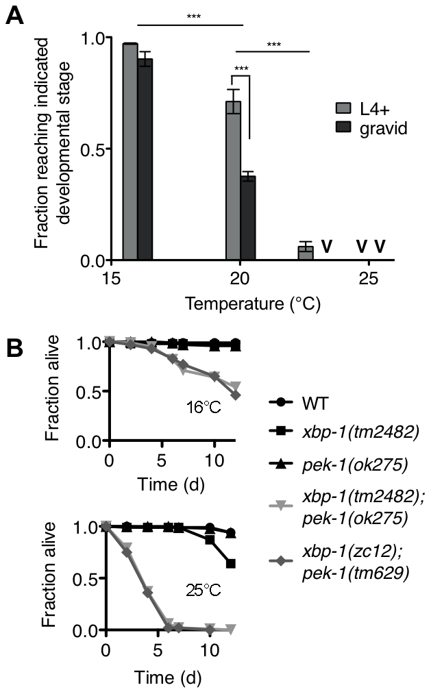 Temperature-sensitive lethality of the <i>xbp-1;pek-1</i> double mutant.