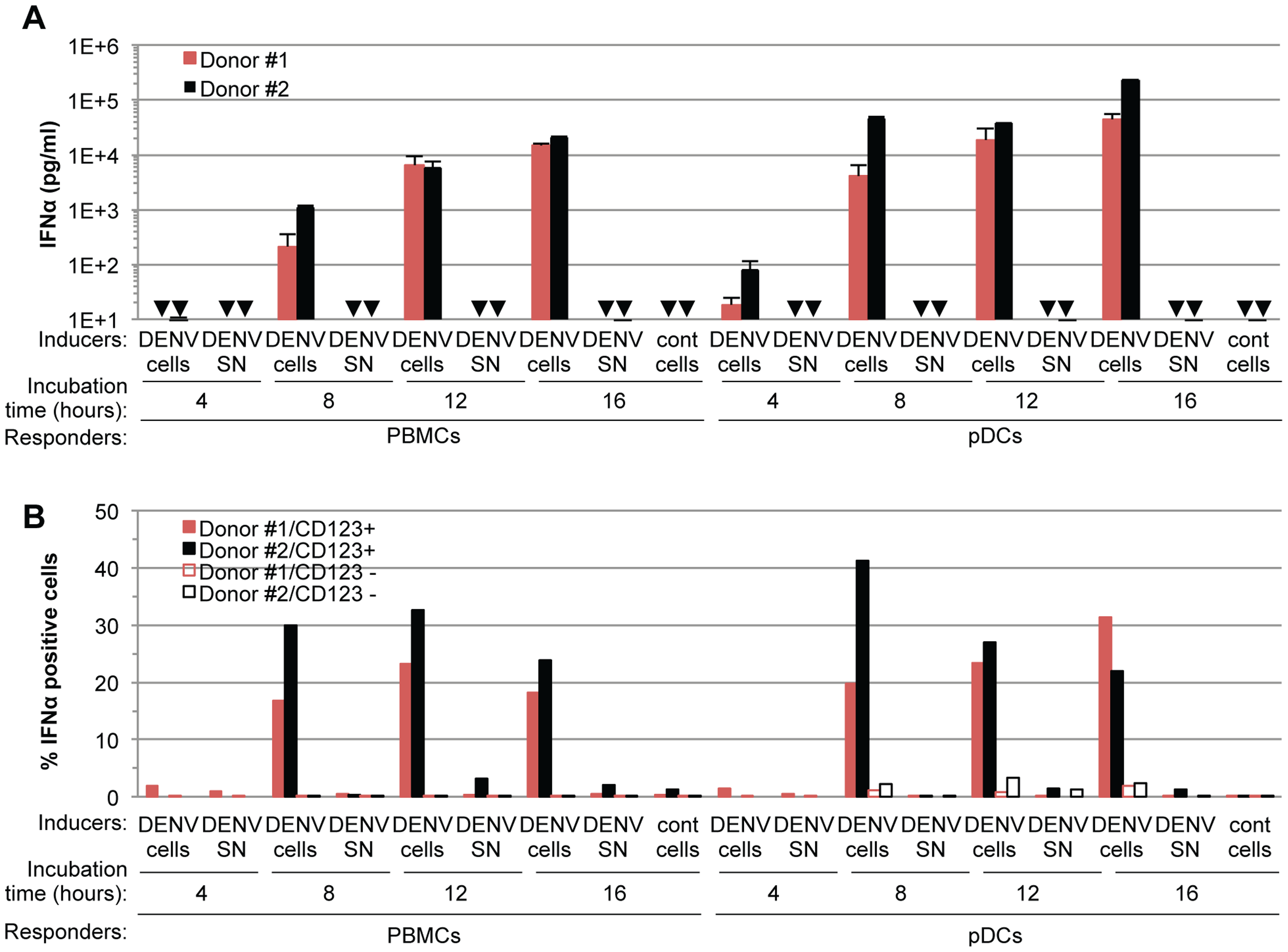 Time course analysis of pDC IFNα production triggered by DENV infected cells.