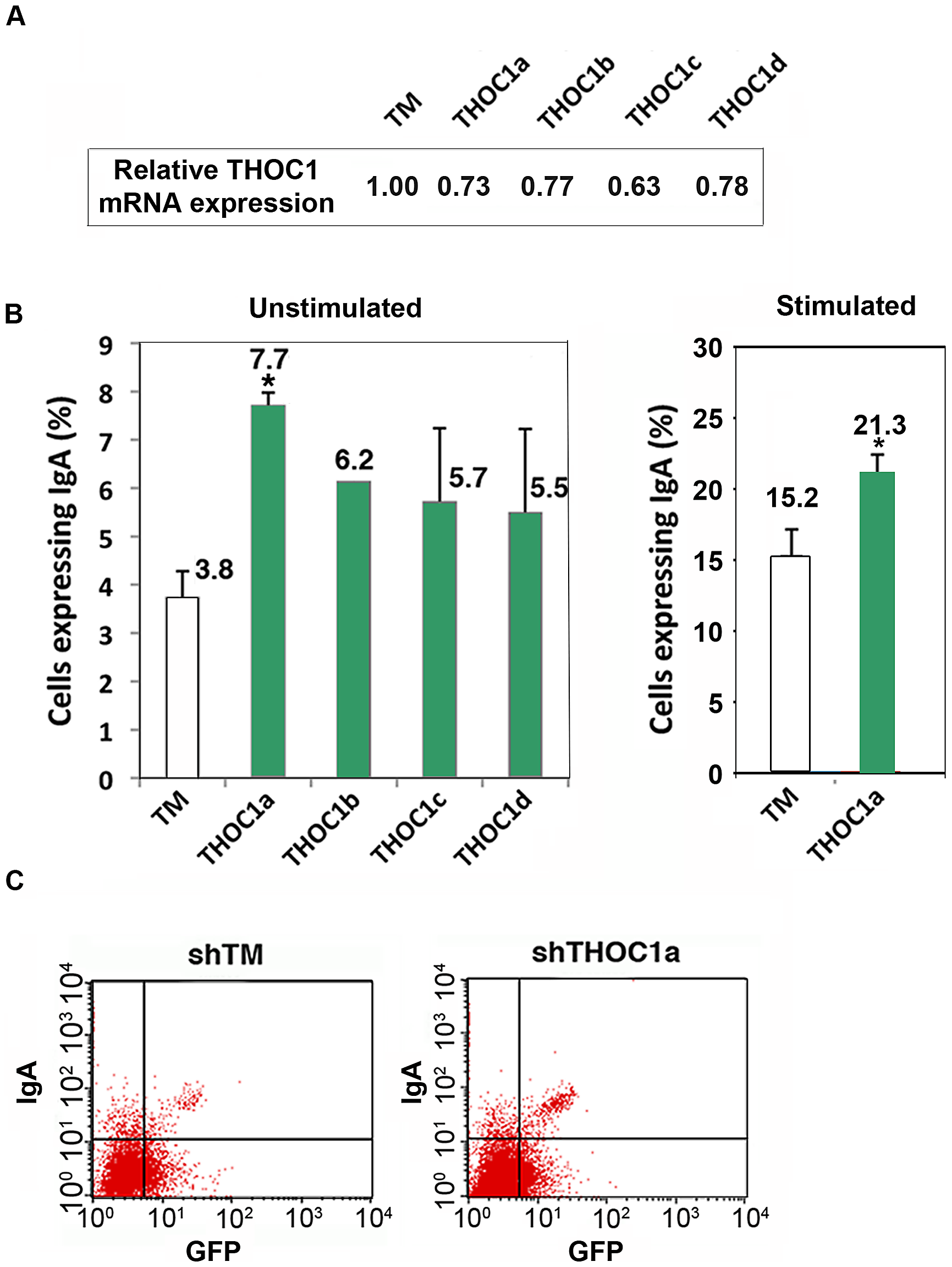 Depletion of THOC1 in CH12 murine B cell line enhances class switch recombination.