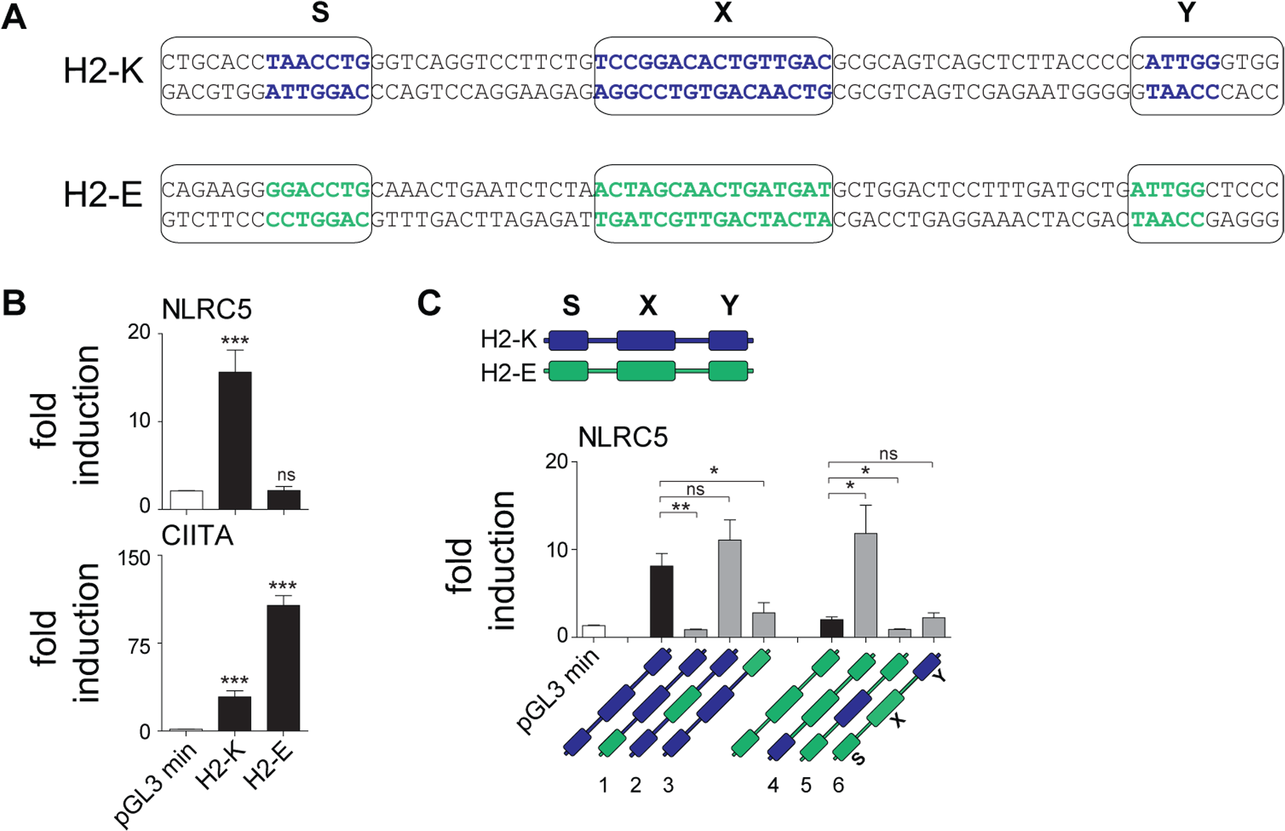 The S box sequence is required for NLRC5-mediated transactivation.