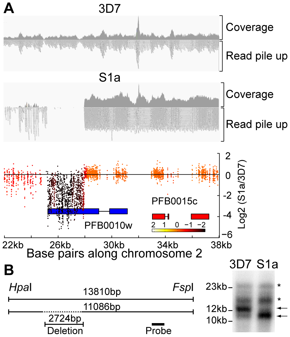 Detection of deletions in subtelomeric regions by WGS and microarray.