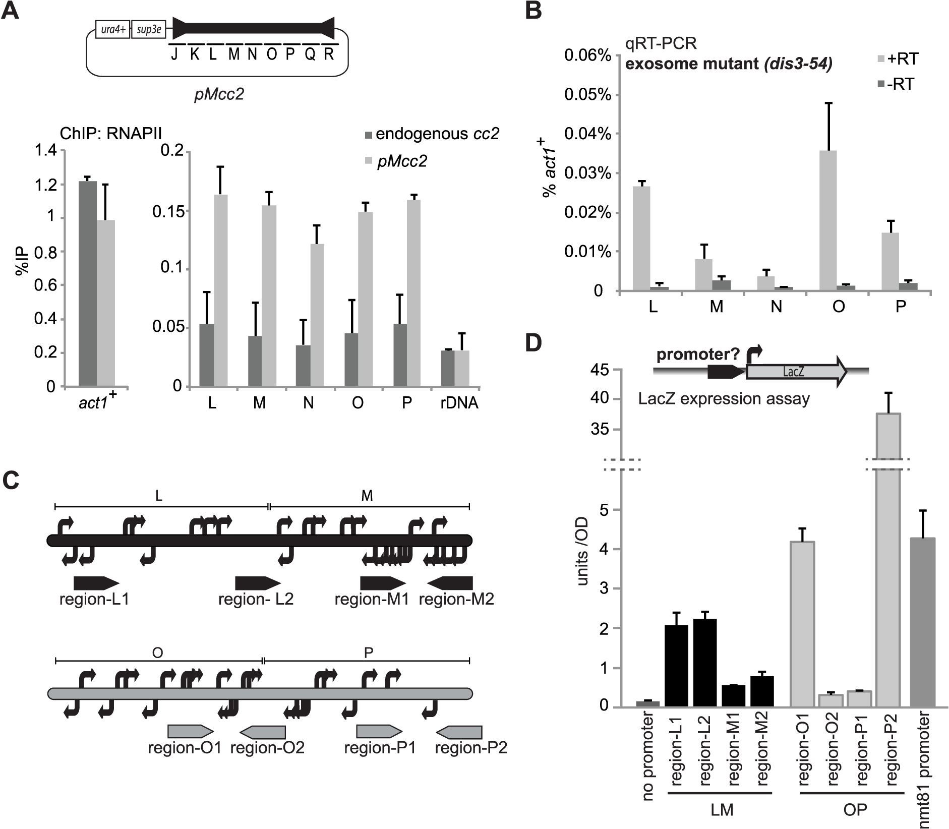 High levels of RNAPII but low levels of transcripts are found at central domain.