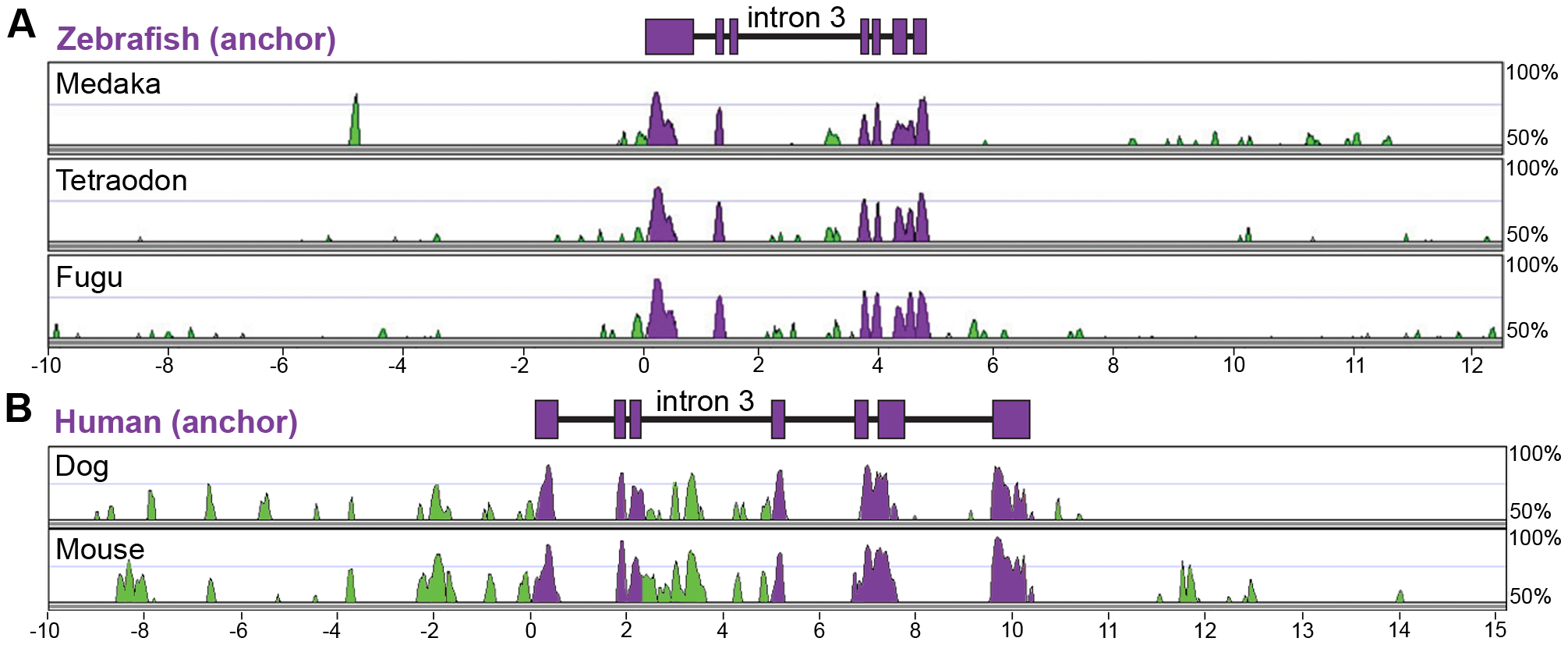 Multiple-species alignments reveal conservation in <i>angptl4</i> gene structure and location of conserved non-coding regions.