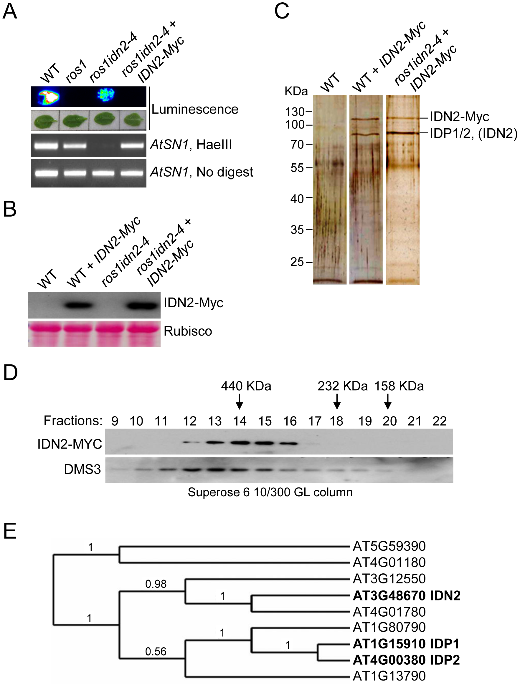 Characterization of the IDN2 complex.