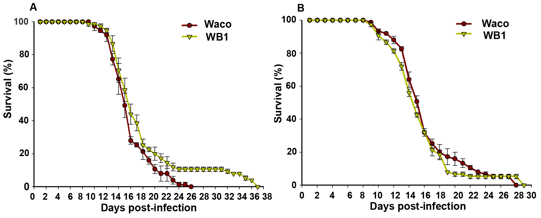 Longevity of Waco and WB1 mosquitoes fed with blood mixed with or without DENV.