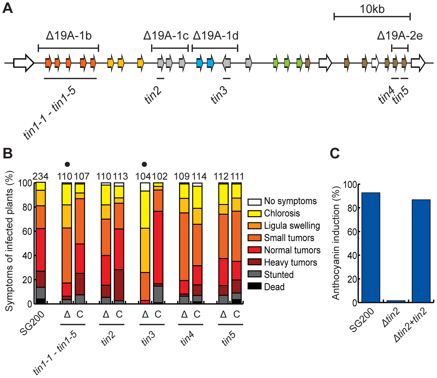 Virulence of <i>tin</i> gene deletion mutants and complemented strains.