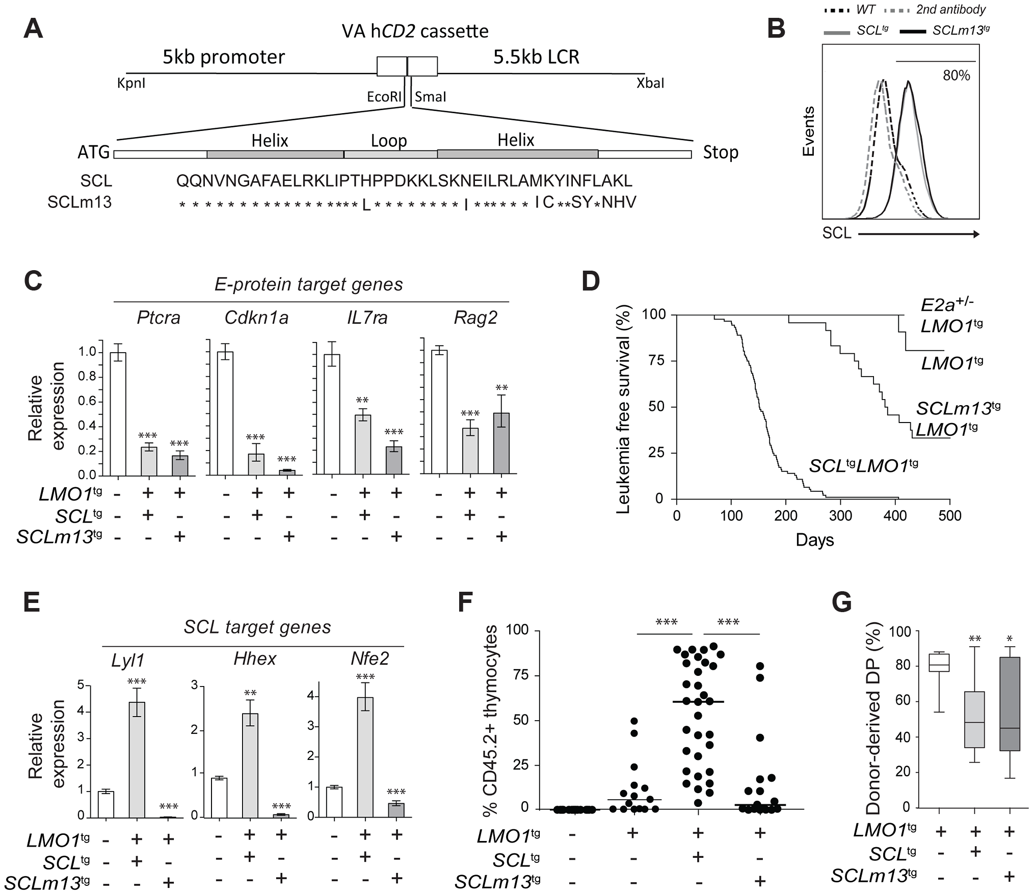Transcription activation driven by SCL-LMO1 interaction is critical for thymocyte reprogramming and T-ALL induction.