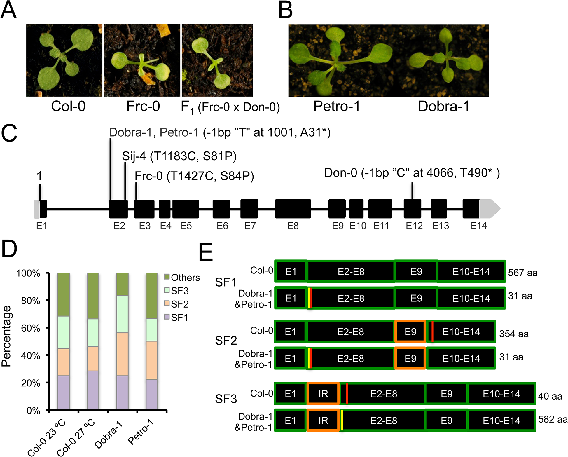 <i>ICA1</i> allelic variation and intragenic suppression by alternative splicing.