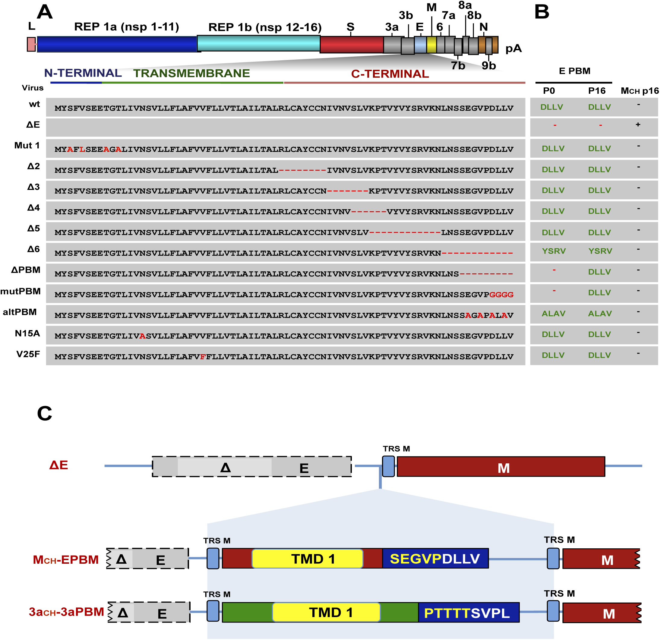 Identification of E protein domain involved in chimeric protein generation in cell culture.