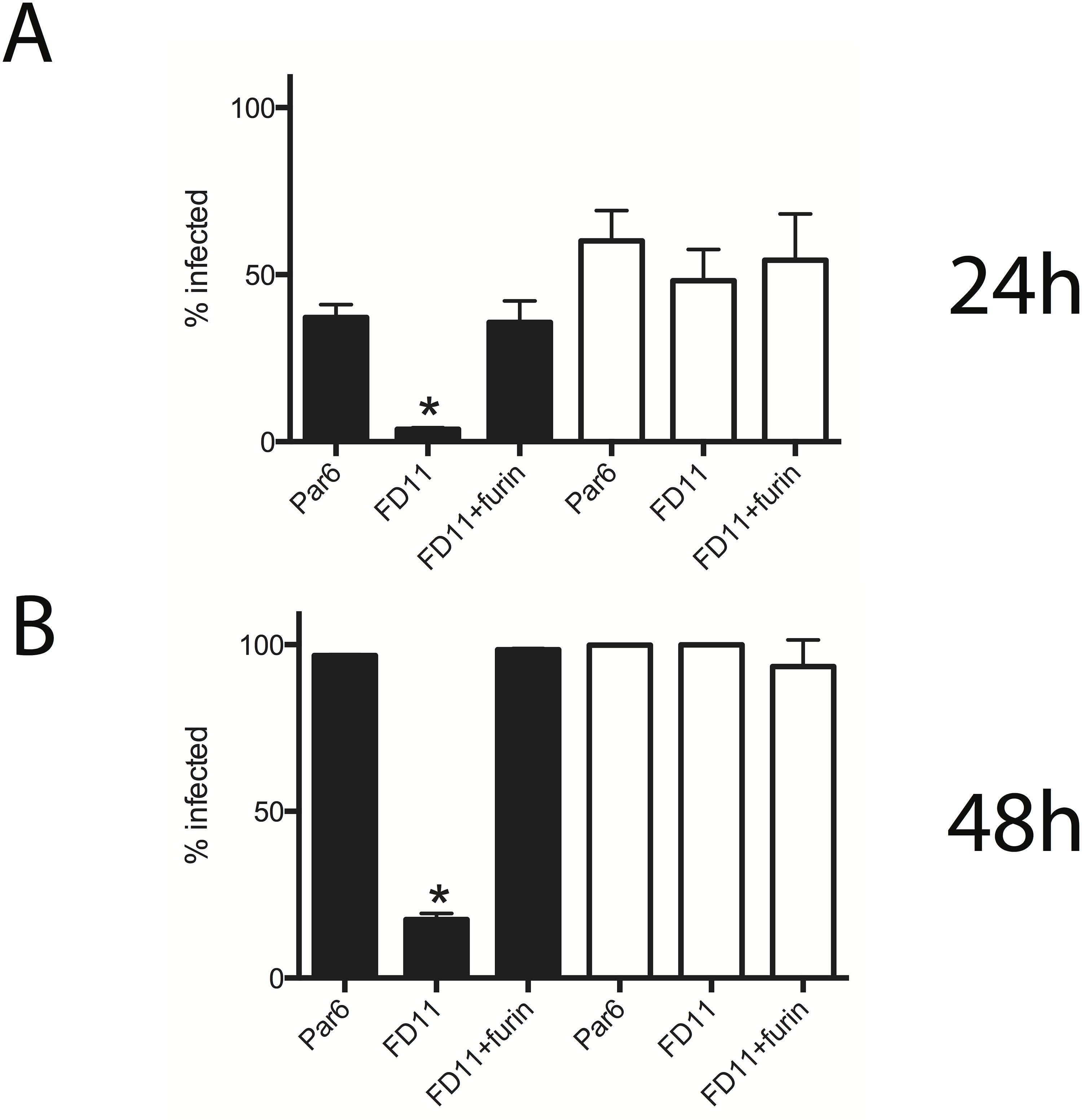 Furin enhances CCHFV propagation.