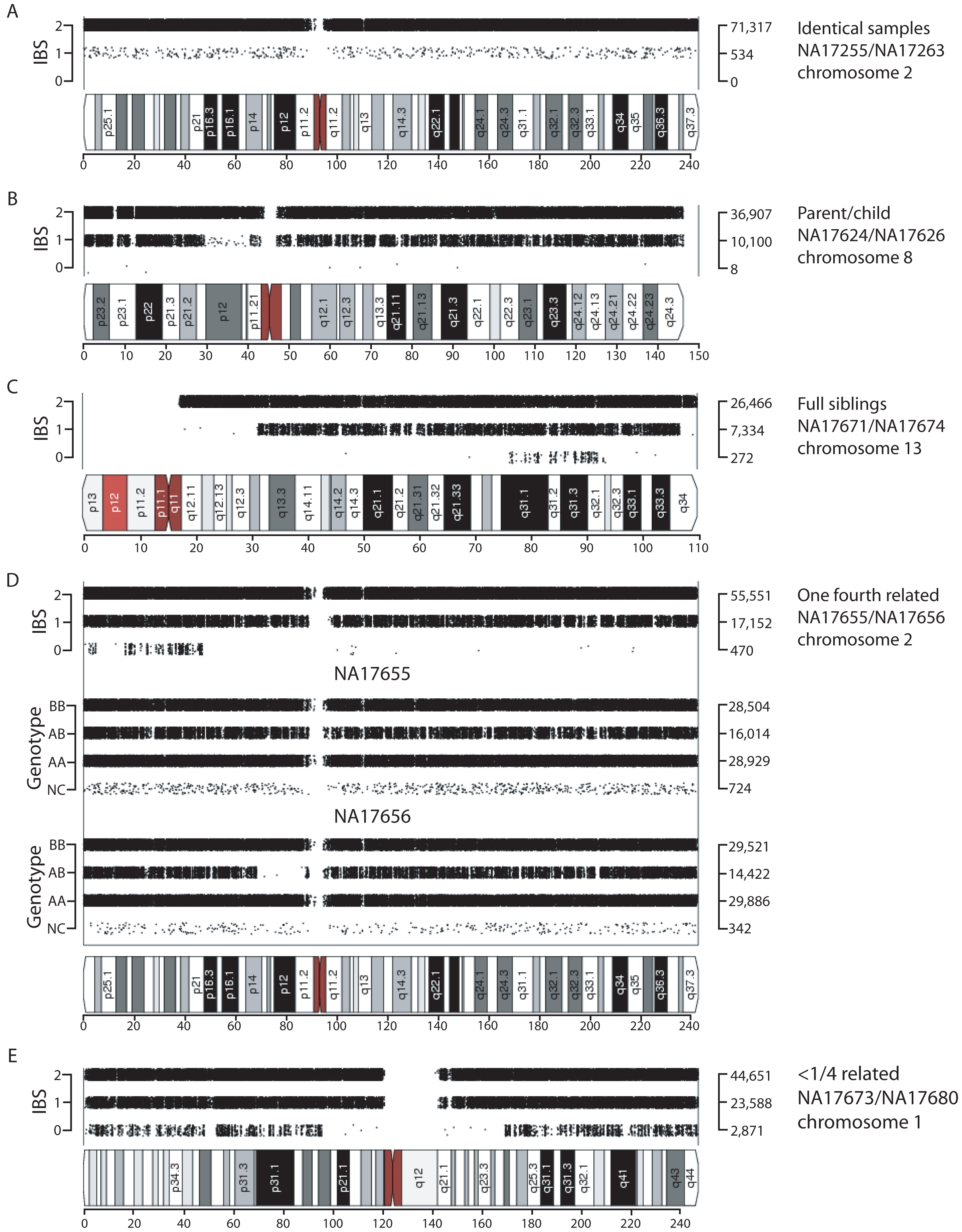 Visualization of shared chromosomal regions based on IBS for related individuals.