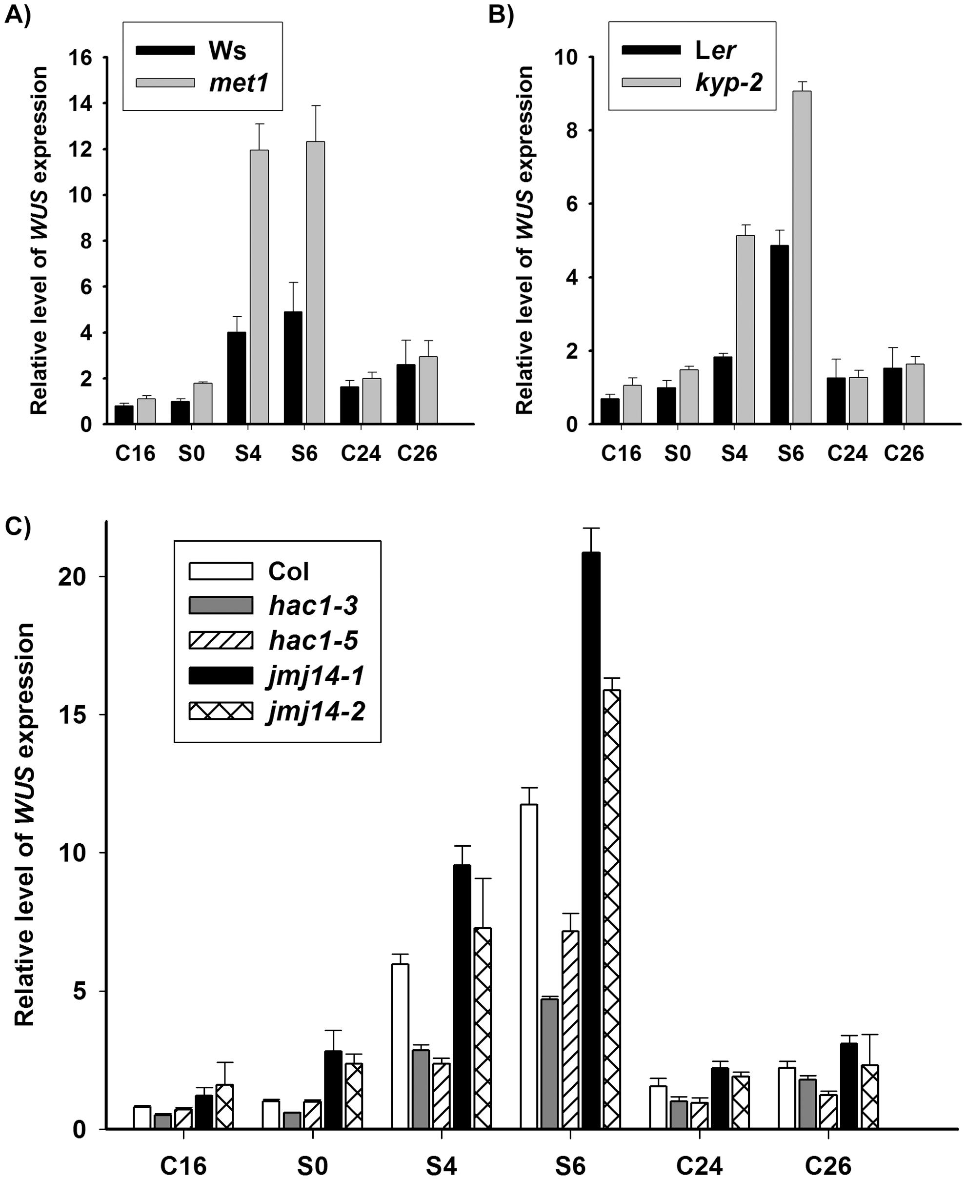 DNA methylation and histone modifications regulate <i>WUS</i> transcript levels.