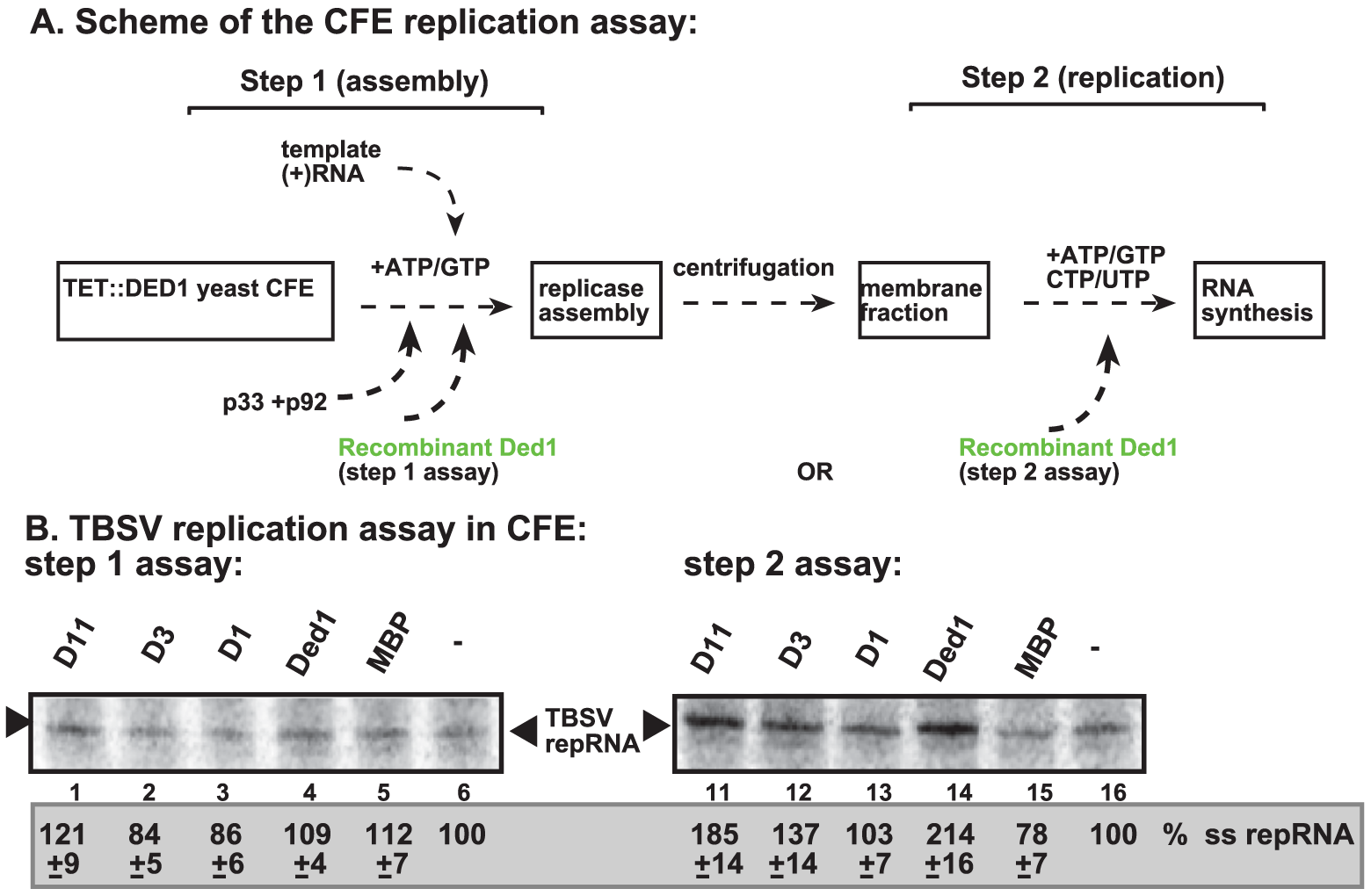 Step-wise cell-free TBSV replication assay does not support a role for Ded1p helicase in the assembly of the TBSV VRC.