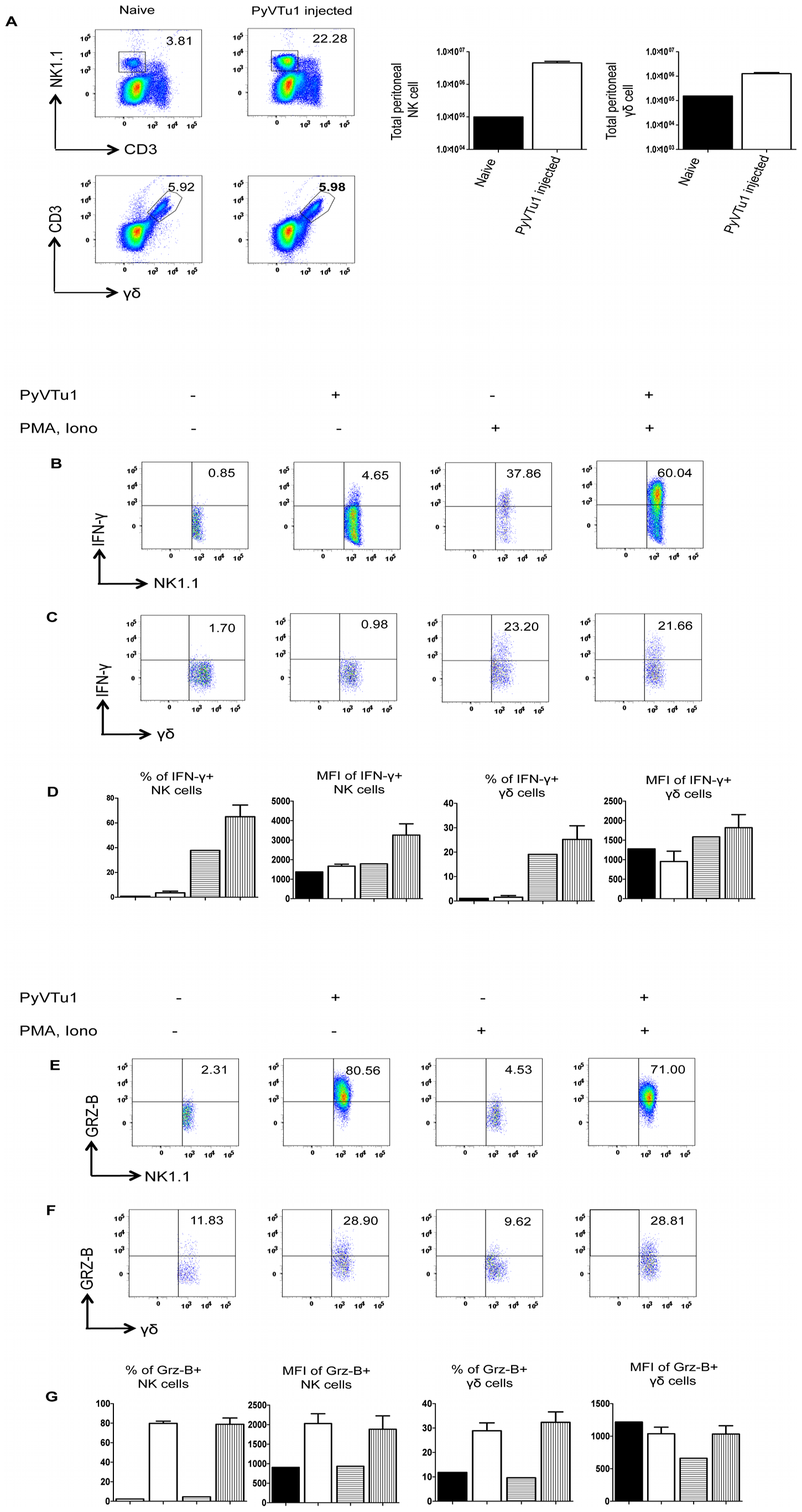 Activation of NK cells and γδ T cells in vivo by i.p. injection of PyVTu cells.