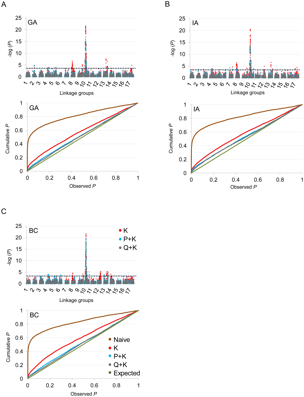Manhattan and quantile–quantile plots of branching associations.