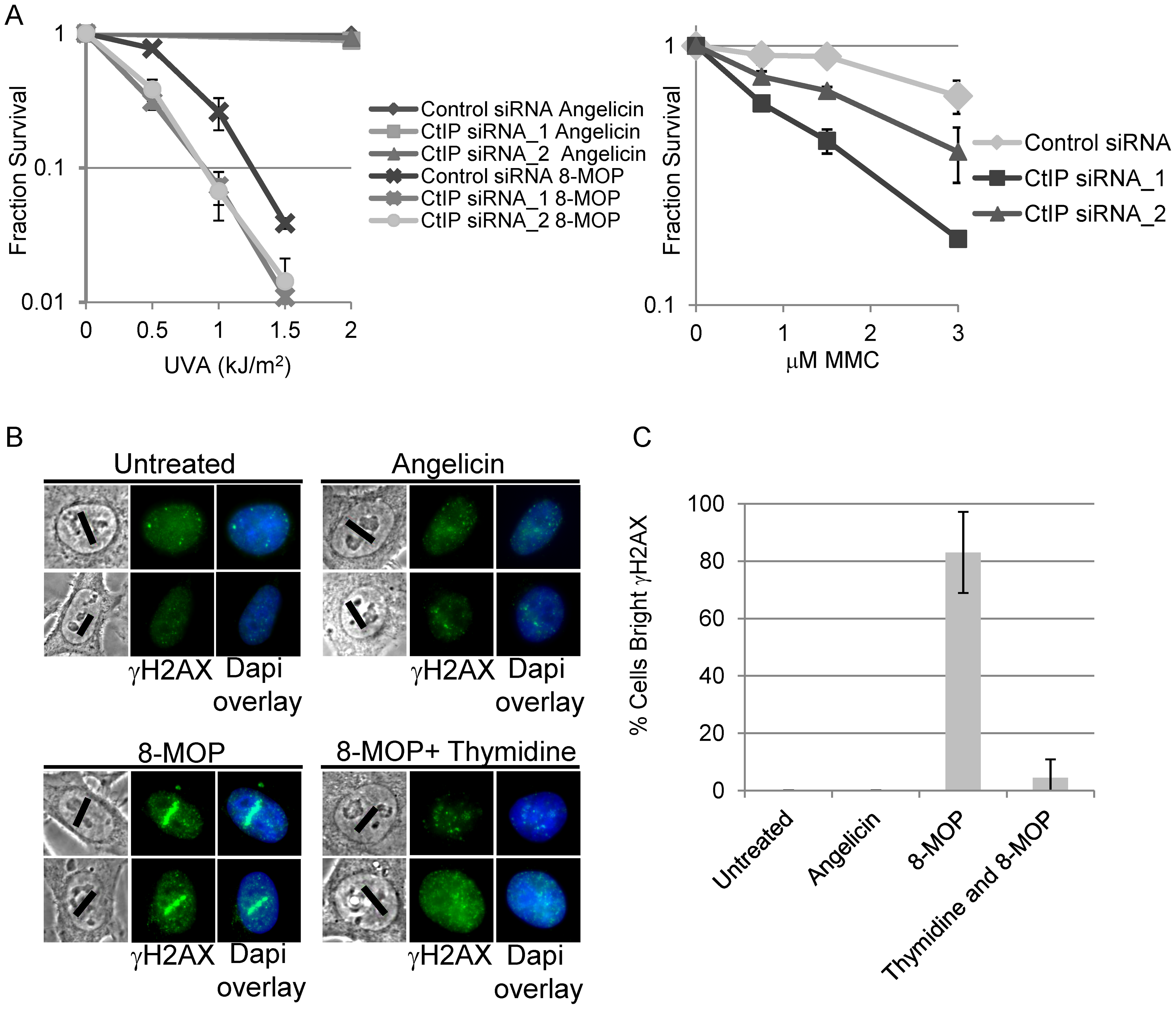 CtIP depletion sensitizes cells to ICL inducing agents.