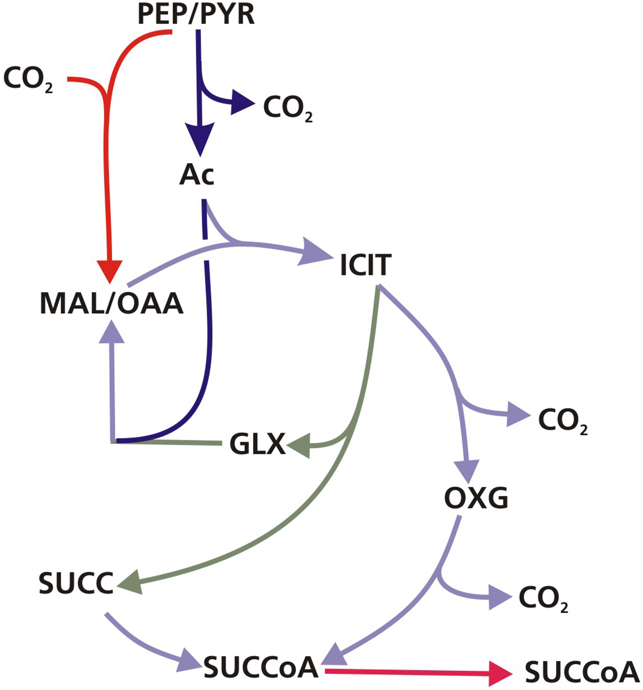 The GAS pathway.