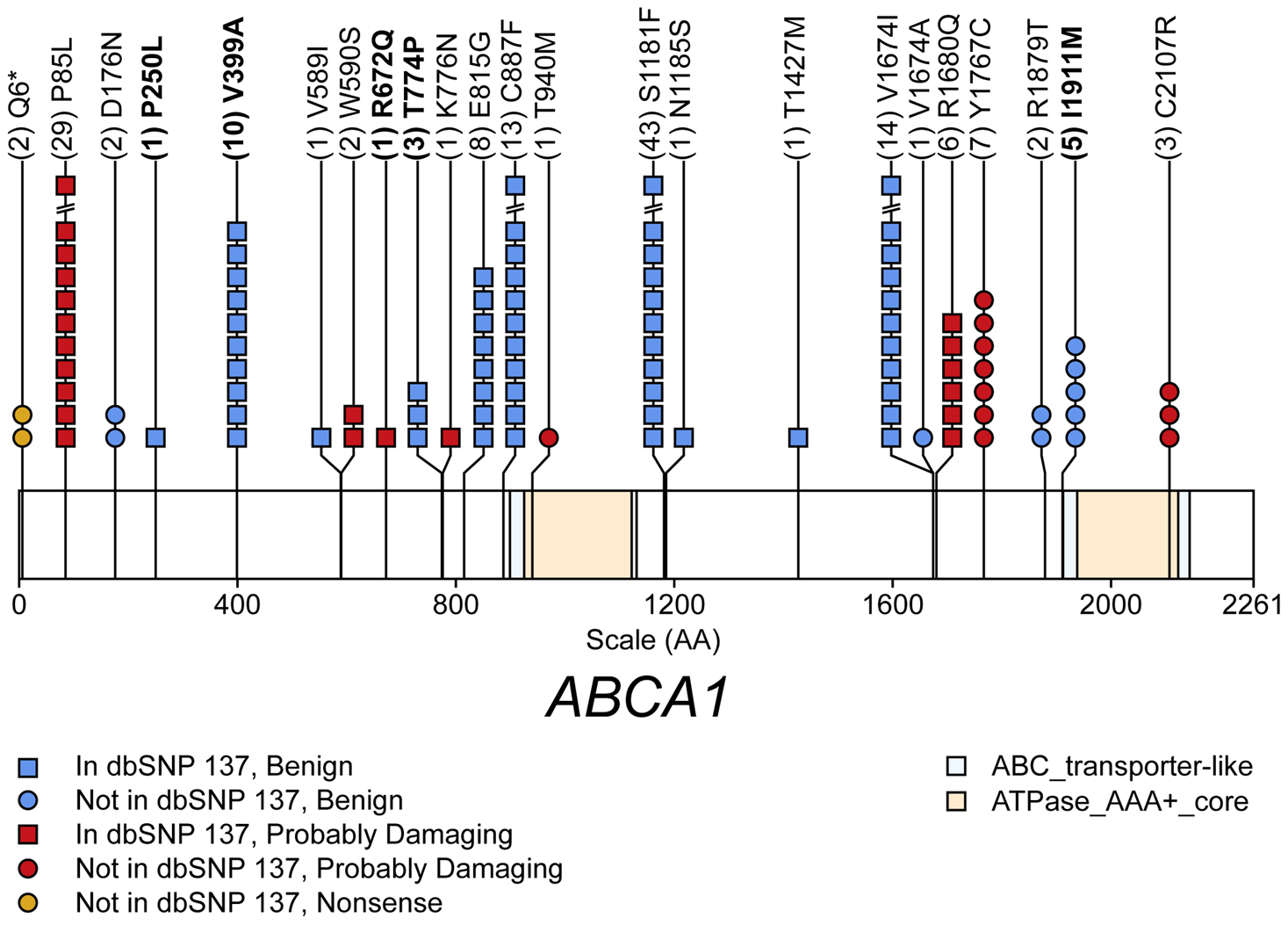 Schematic of rare (MAF<1%) non-synonymous variants used in the gene-level test of total cholesterol (TC) in gene <i>ABCA1</i>.