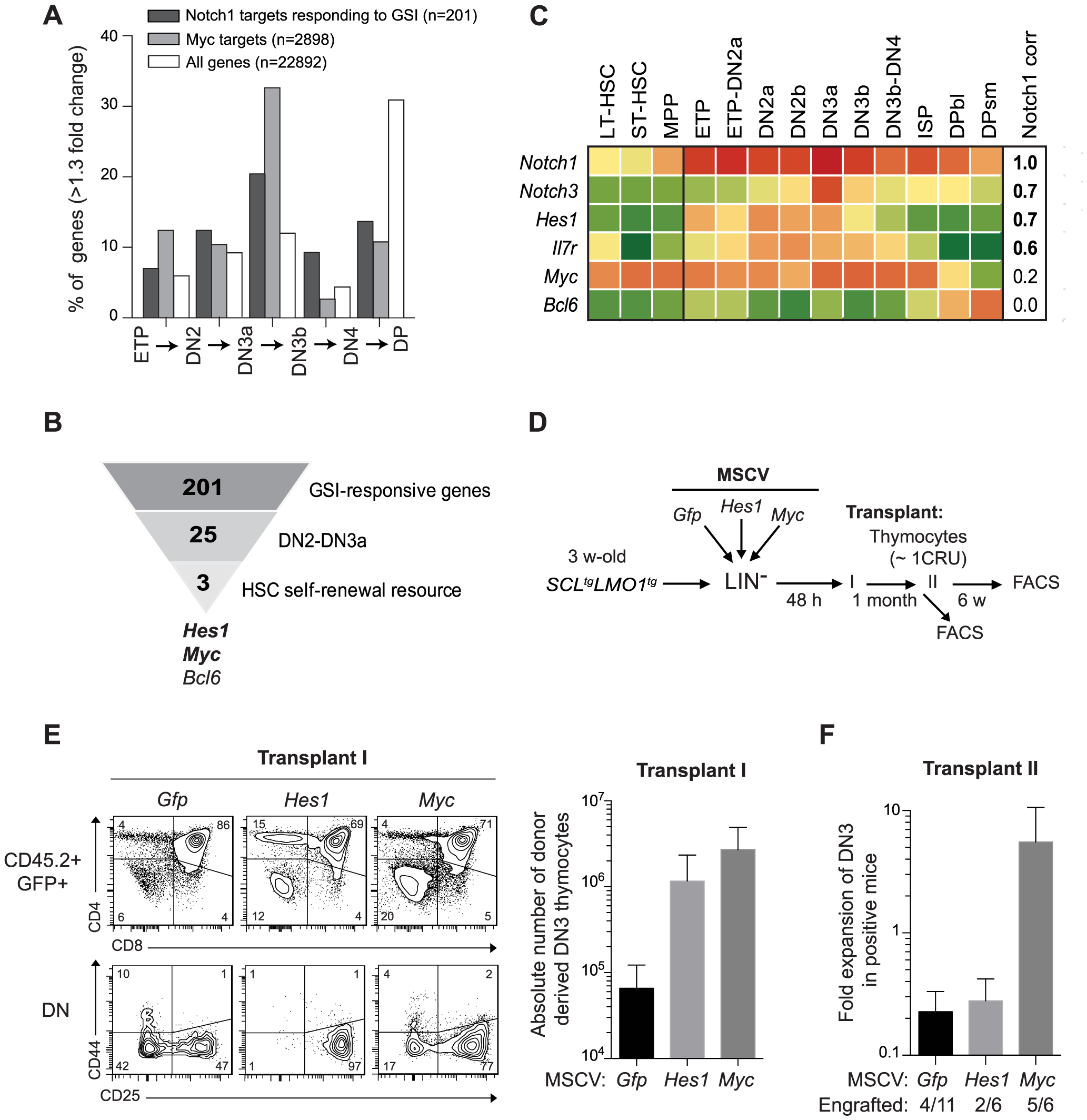 Functional importance of <i>Hes1</i> and <i>c-Myc</i> downstream of <i>Notch1</i> in thymocyte reprogramming induced by SCL-LMO1.