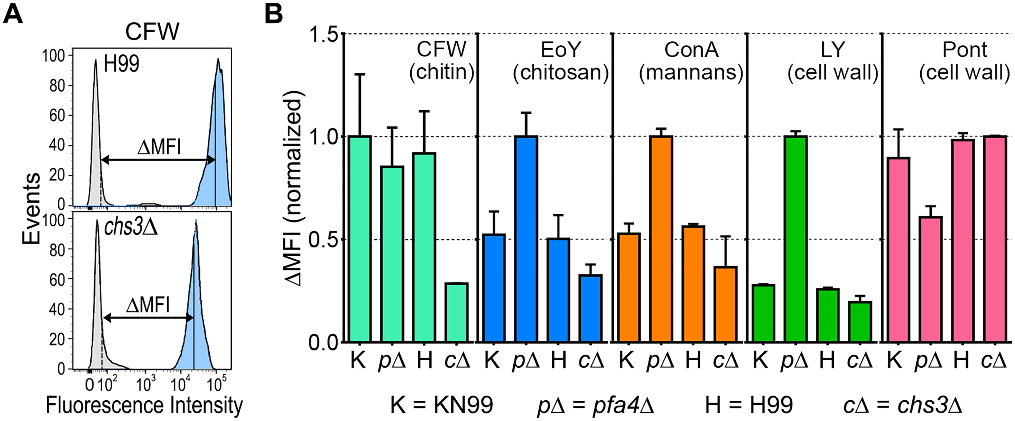 Exposure of cell surface components is altered in <i>pfa4</i>Δ cells.
