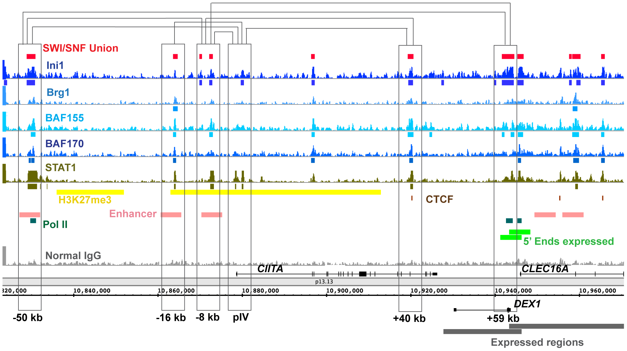 SWI/SNF signals relative to 3C (Chromosome Conformation Capture) sites in the <i>CIITA</i> locus.