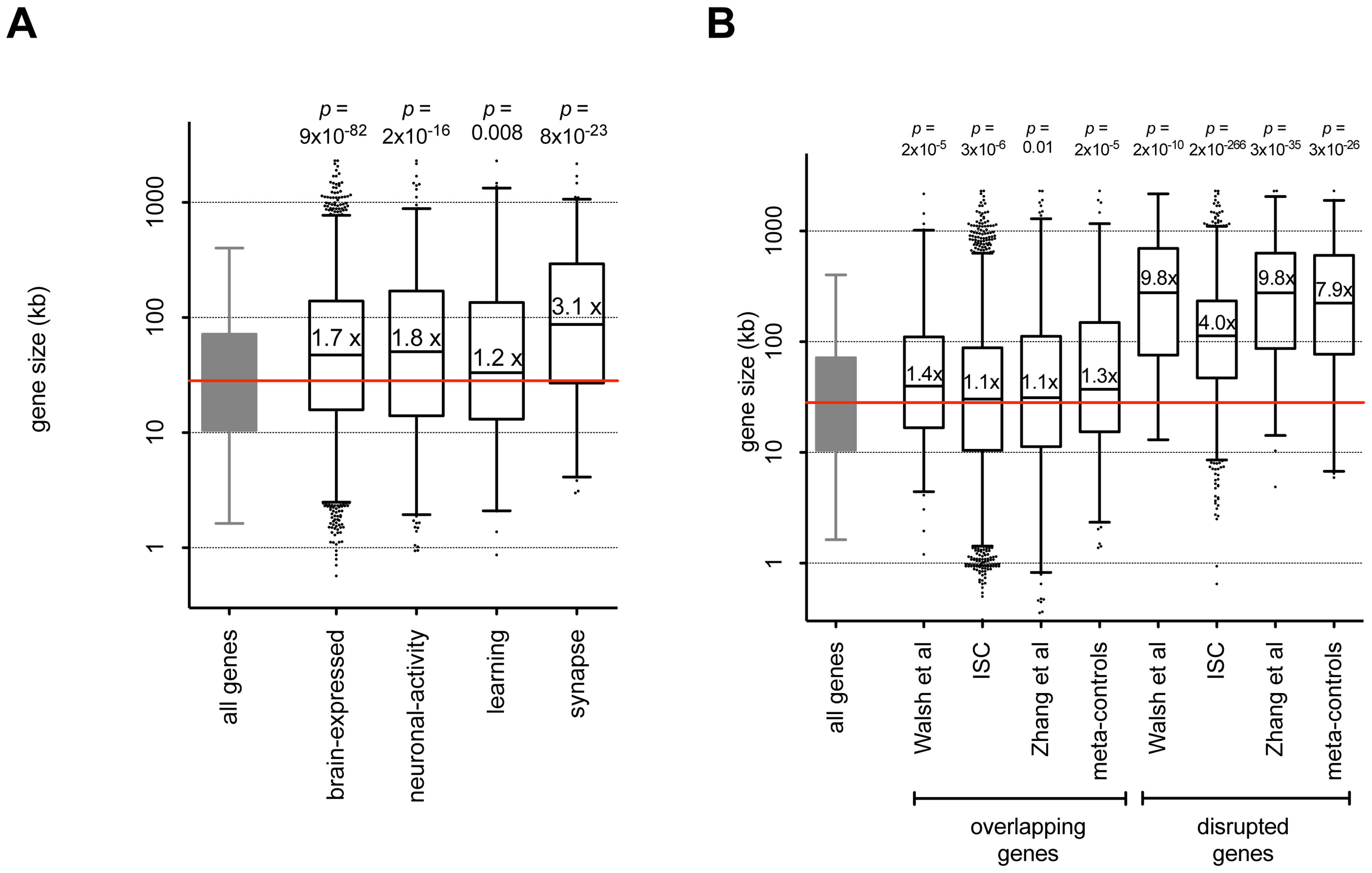 Genes with brain function and genes impacted by CNVs are large.