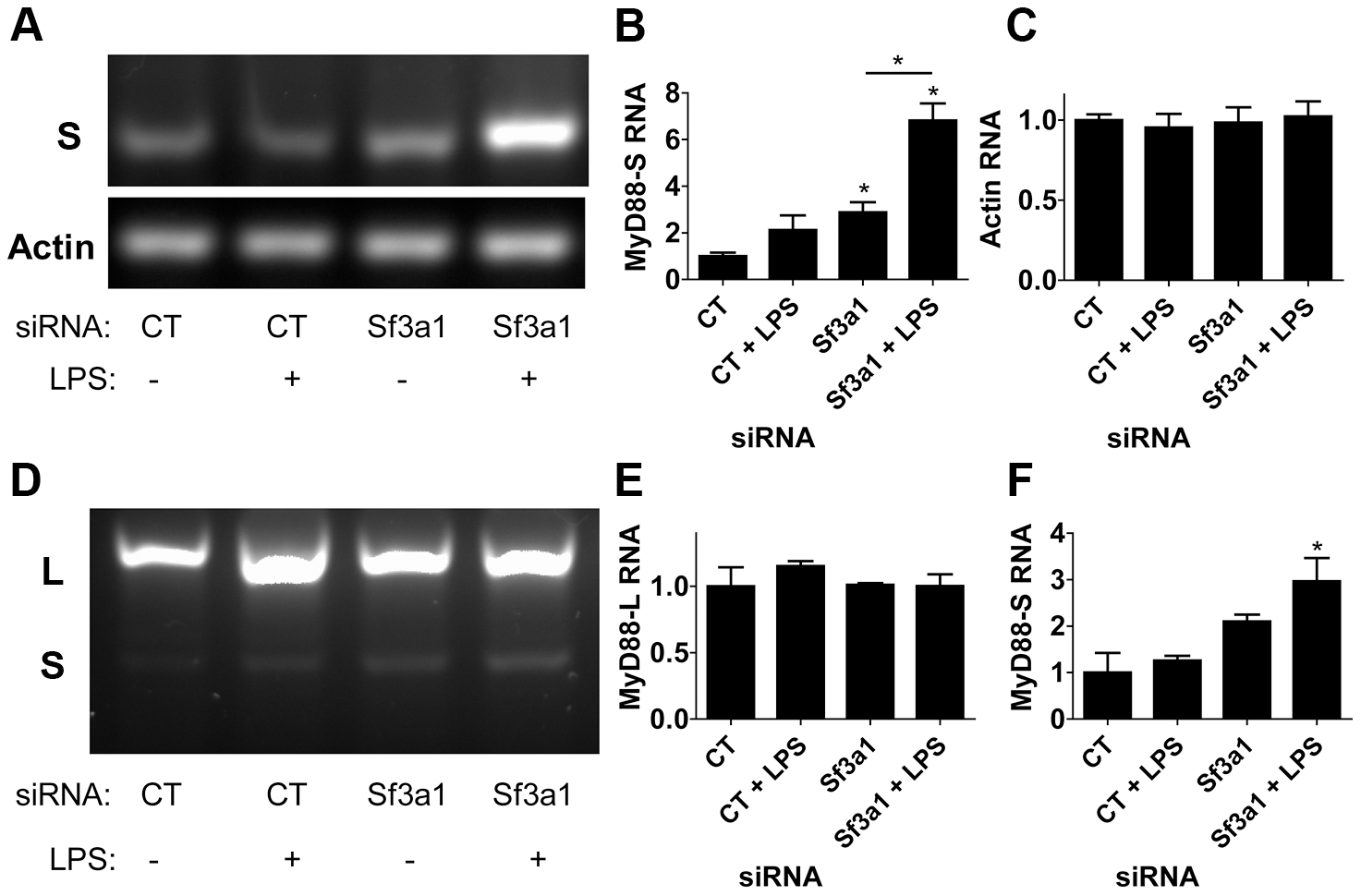 RT-PCR assay demonstrates that inhibition of SF3A1 enhances production of MyD88<sub>S</sub> mRNA.